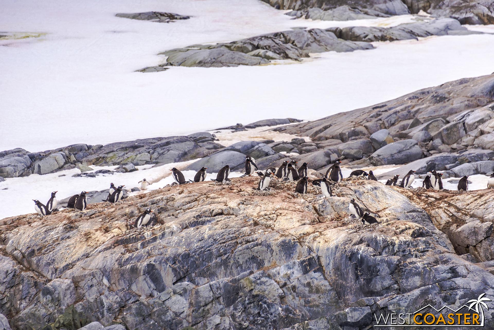 Antarctica-18_0609-0004.jpg