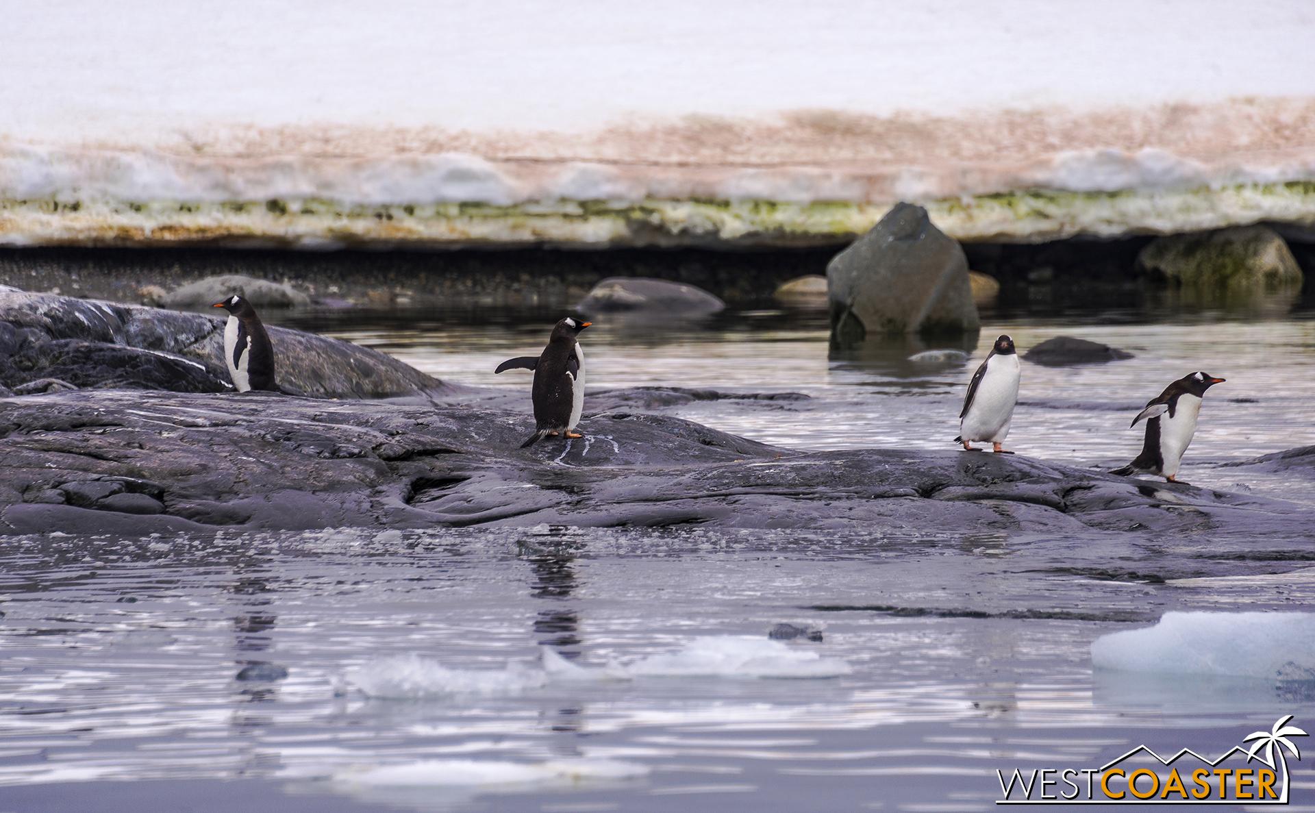 Antarctica-18_0609-0007.jpg