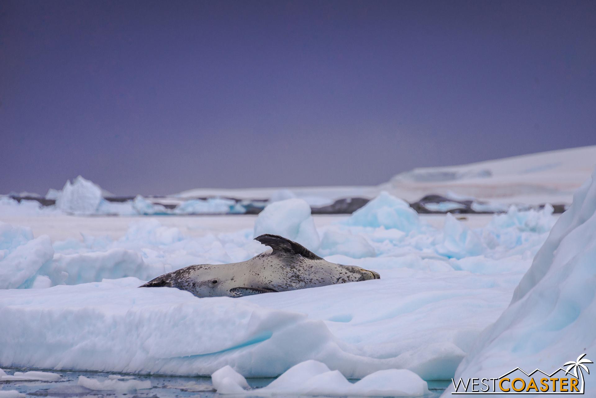 Antarctica-18_0609-0010.jpg