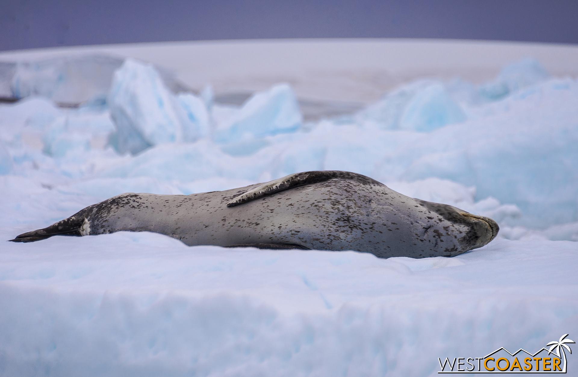 Antarctica-18_0609-0011.jpg