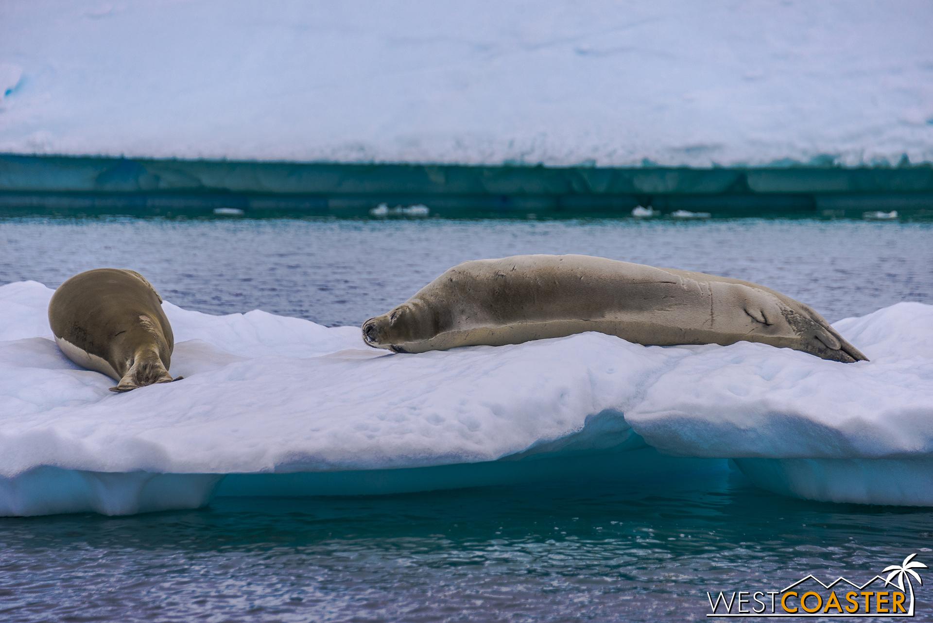 Antarctica-18_0609-0015.jpg