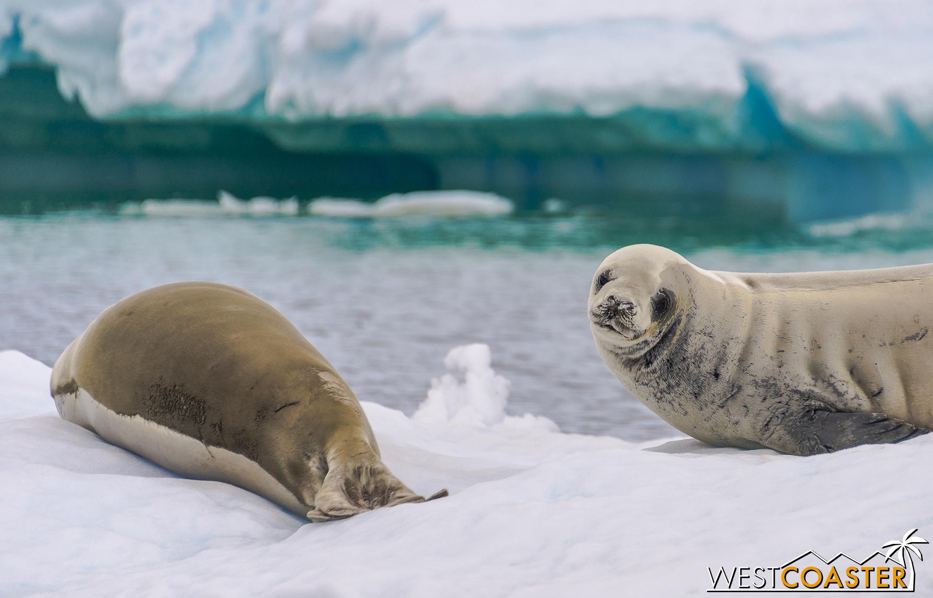 Antarctica-18_0609-0020.jpg