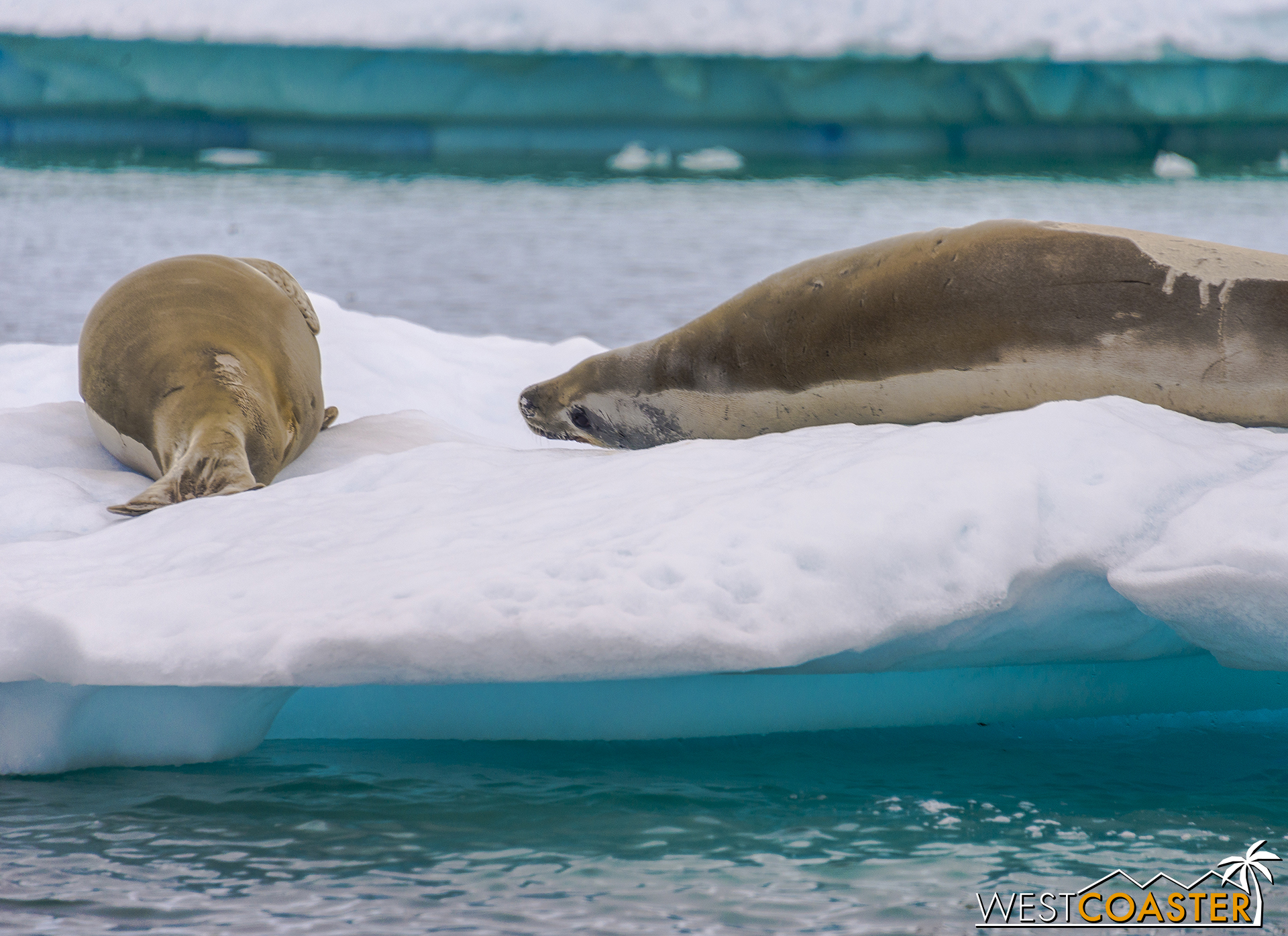 Antarctica-18_0609-0019.jpg