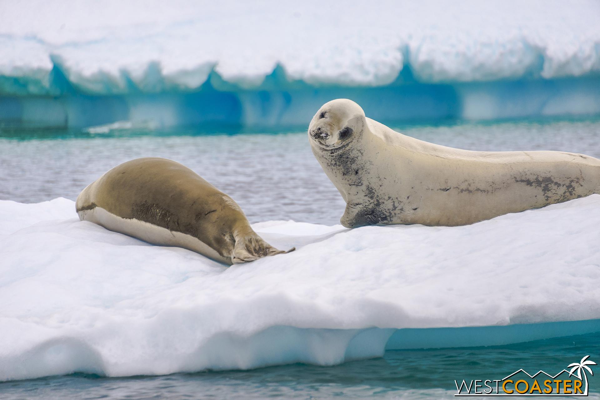 Antarctica-18_0609-0022.jpg