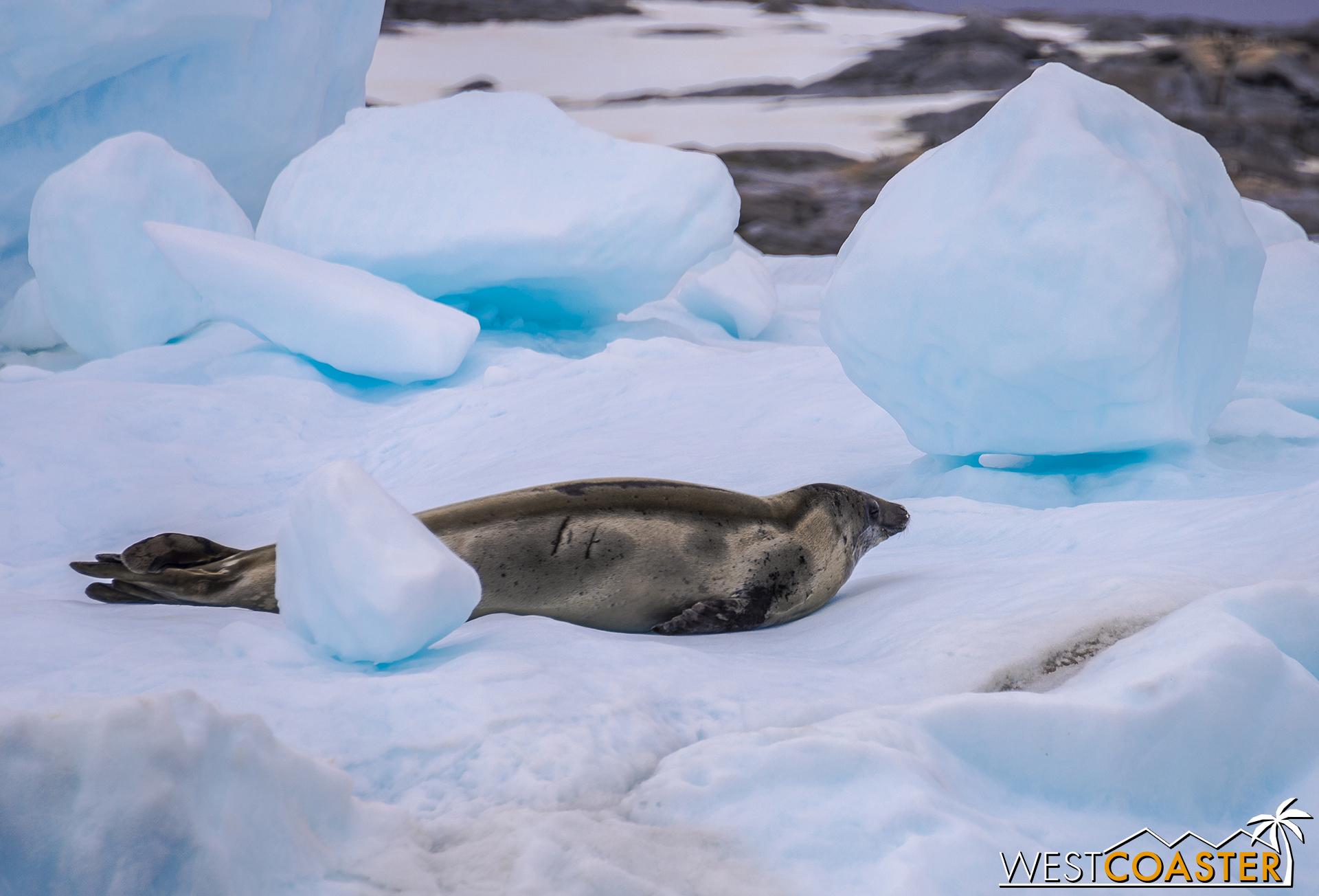 Antarctica-18_0609-0024.jpg