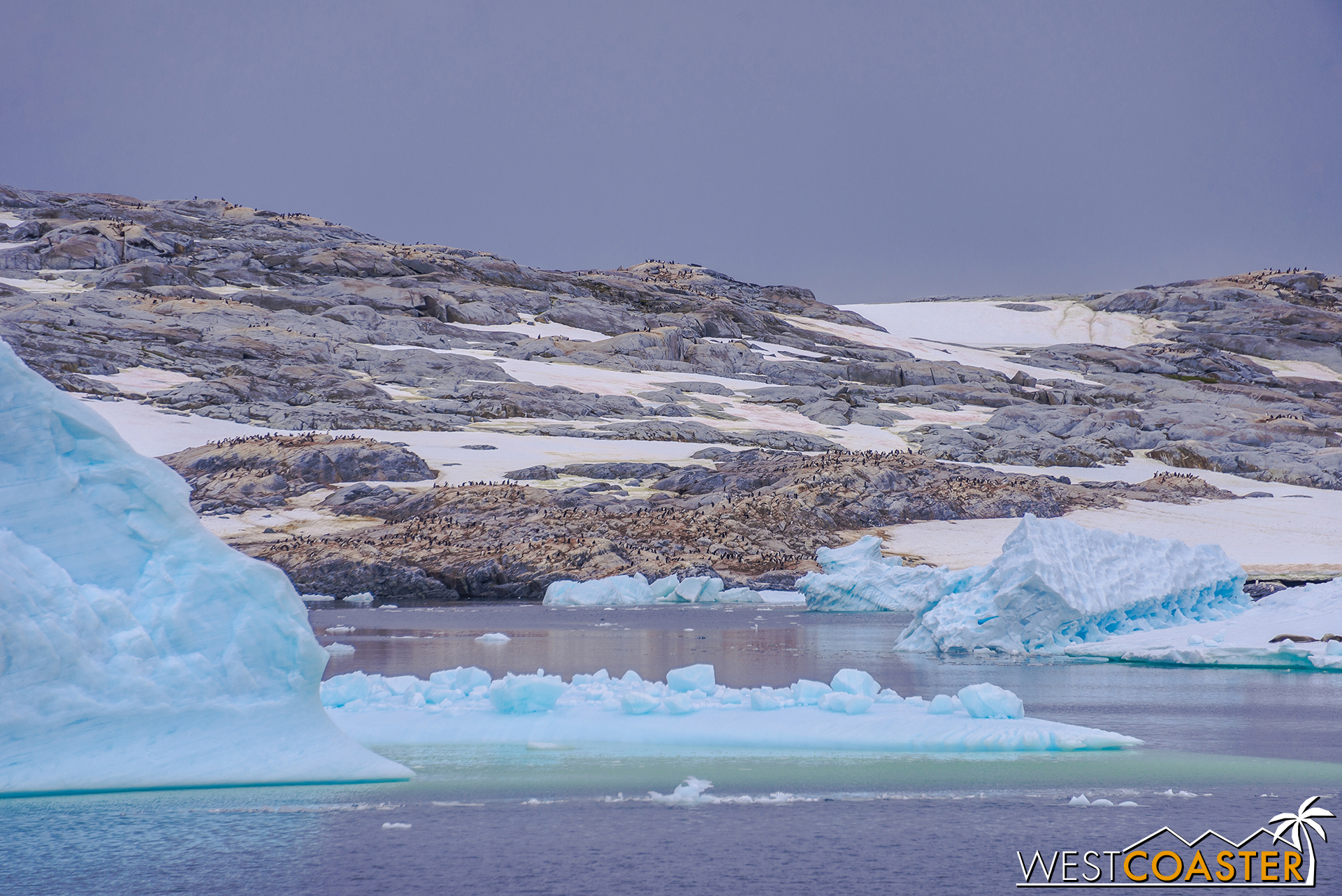 Pléneau Bay is also home to one of the largest gentoo penguin colonies around these parts.