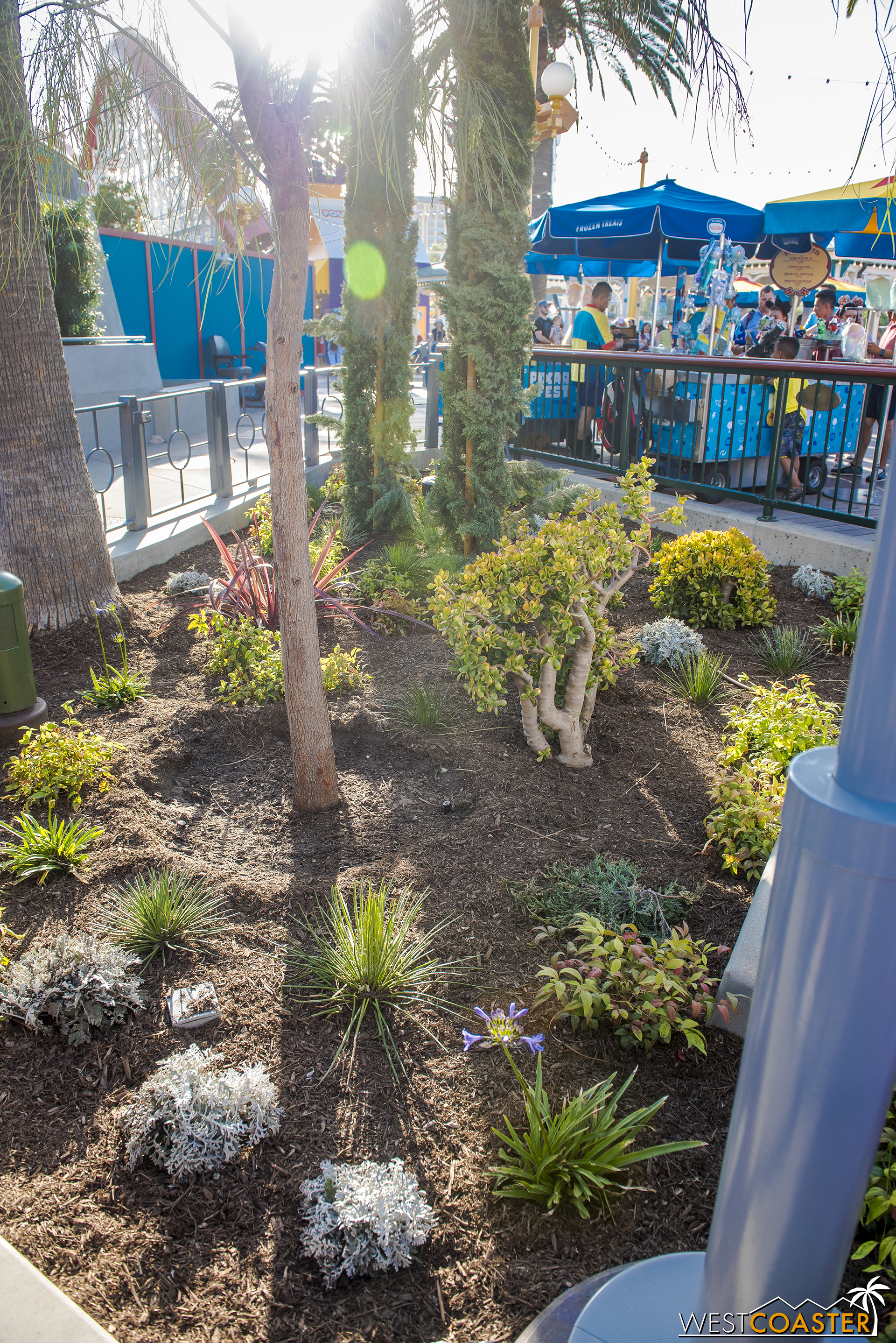 The planters themselves have a lot of drought-tolerant planting, which is useful.