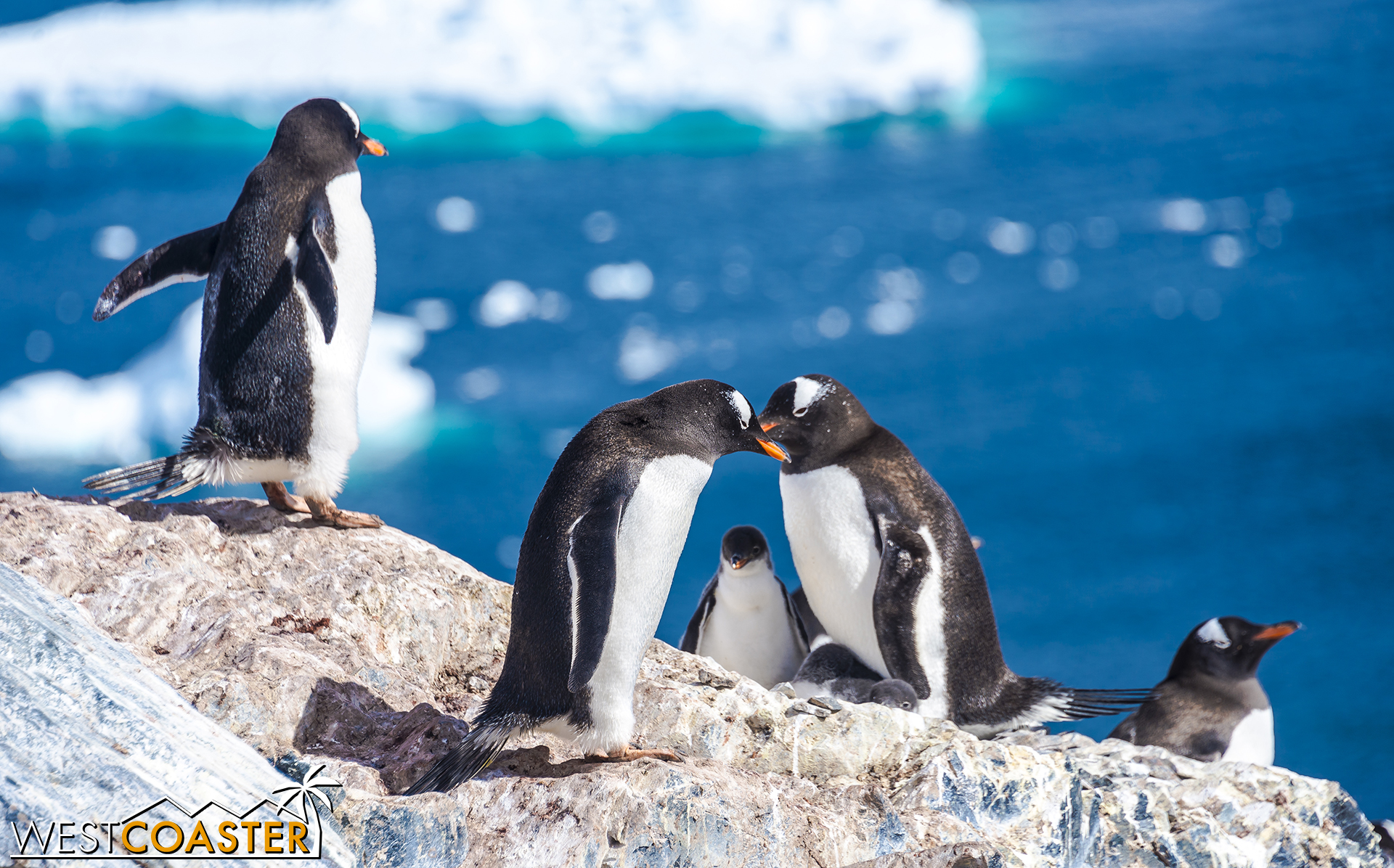 Two penguin parents share a loving moment while framing their chick.