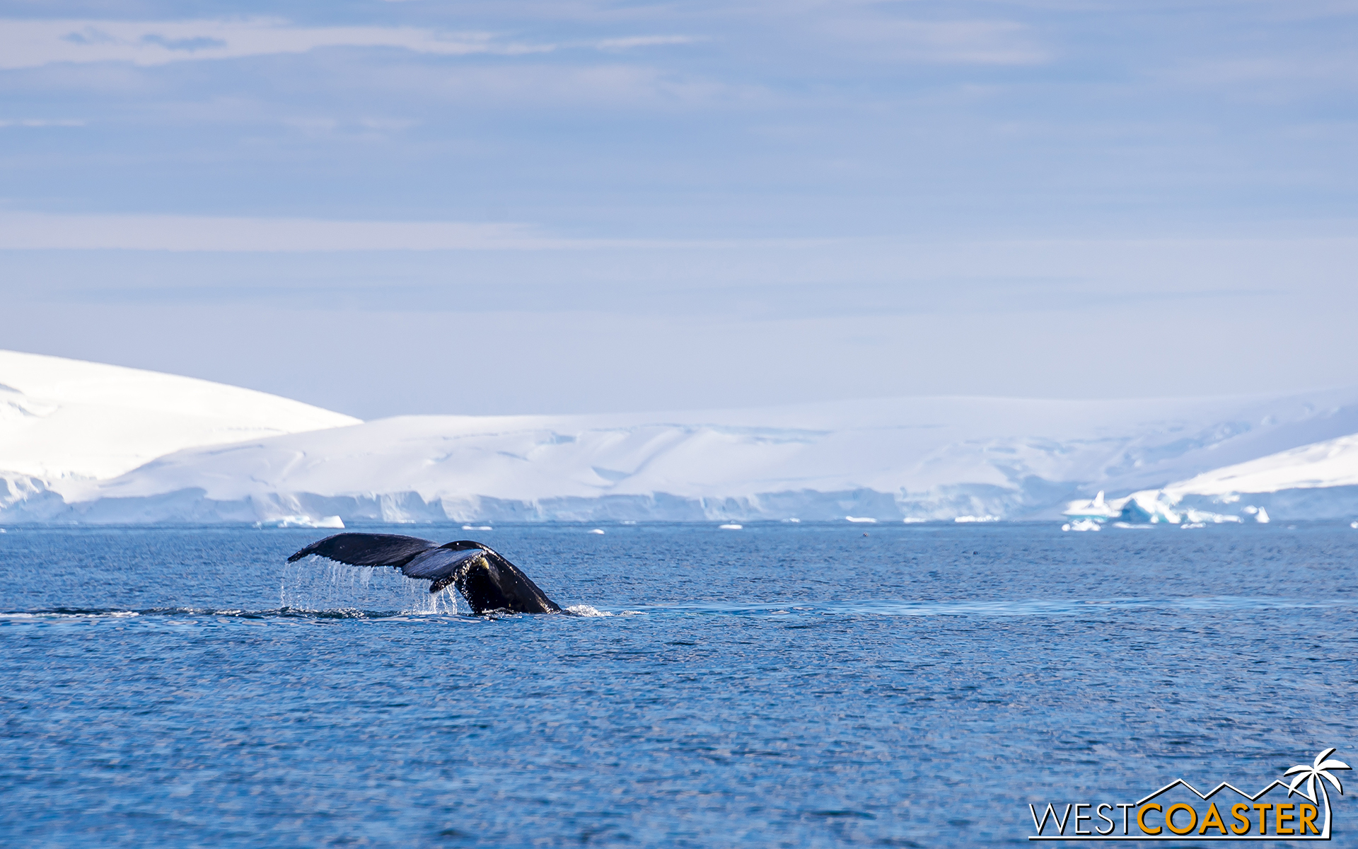 Antarctica-18_0726-0007.jpg