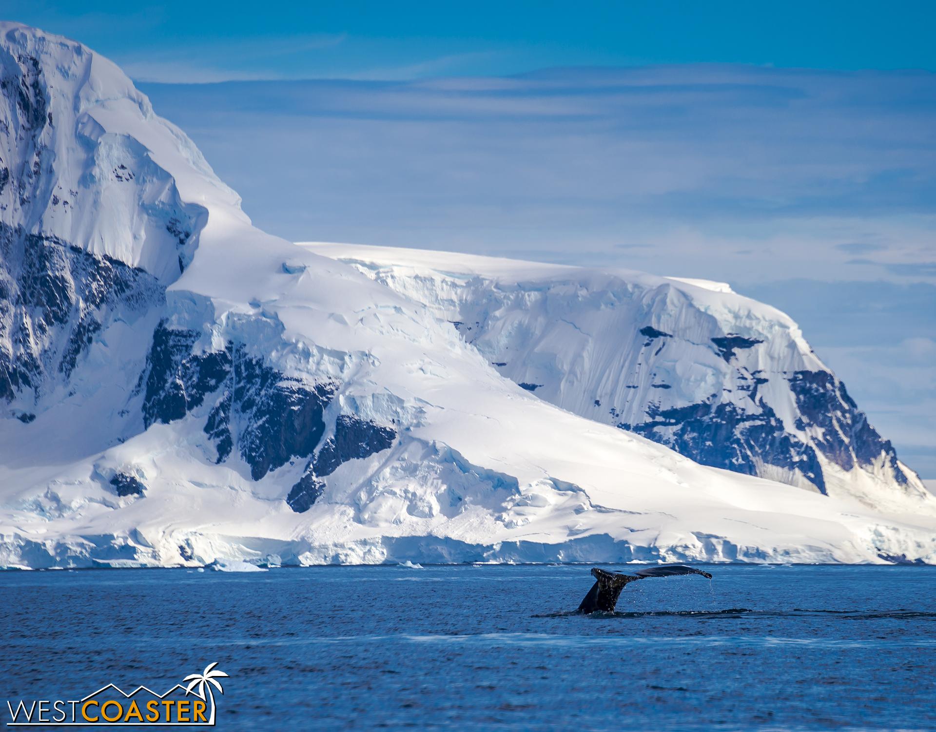 Antarctica-18_0726-0011.jpg