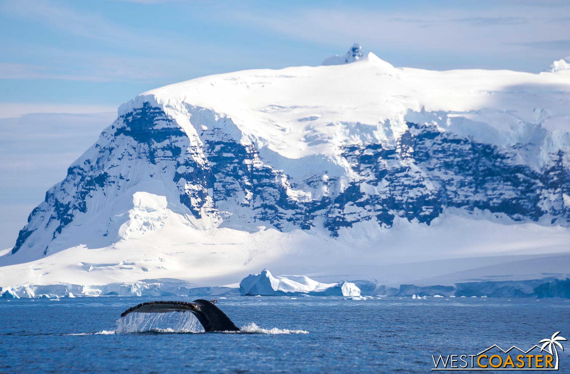 Antarctica-18_0726-0012.jpg