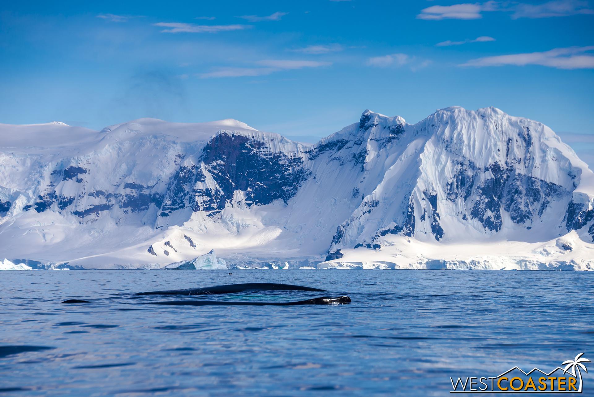 Antarctica-18_0726-0018.jpg