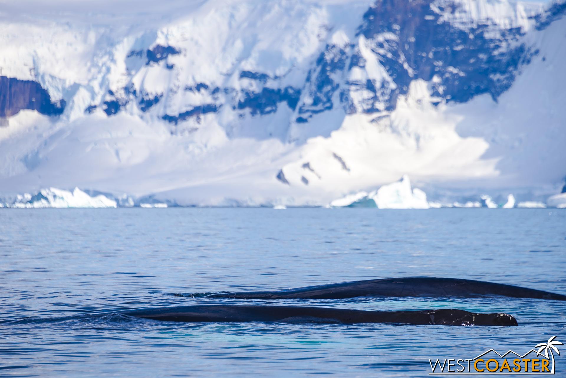 Antarctica-18_0726-0019.jpg