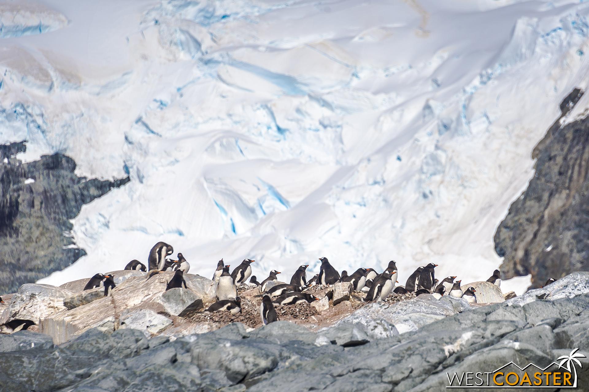 Antarctica-18_0726-0022.jpg