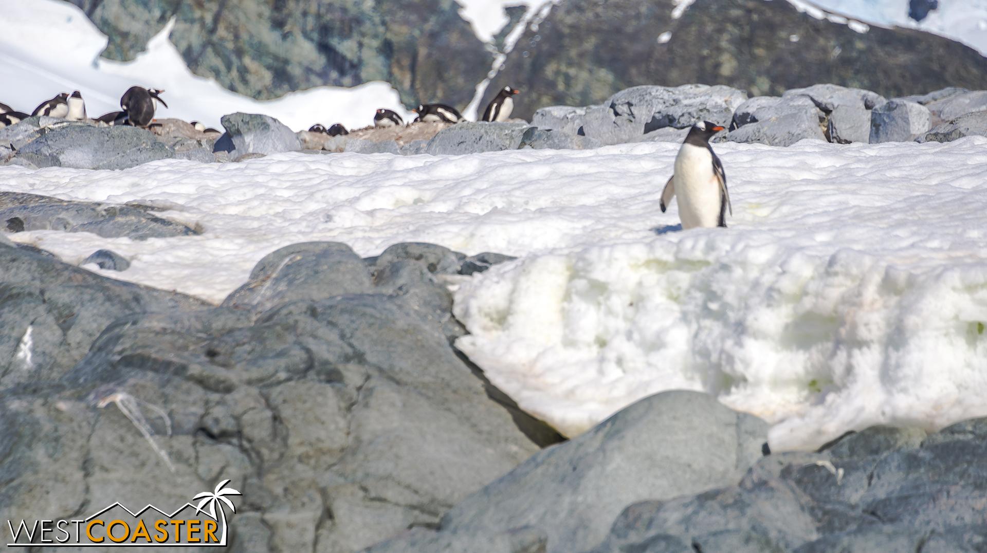 Antarctica-18_0726-0023.jpg