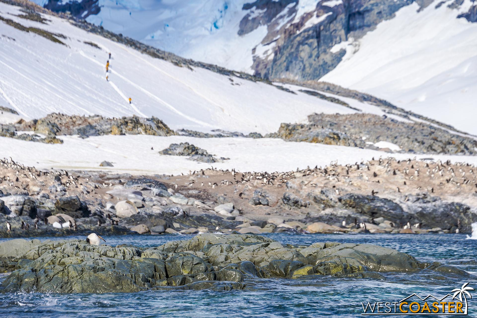 Antarctica-18_0726-0027.jpg