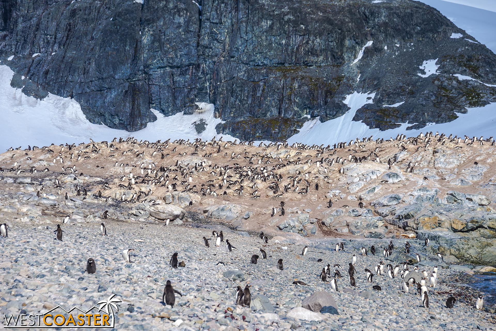 Antarctica-18_0726-0030.jpg