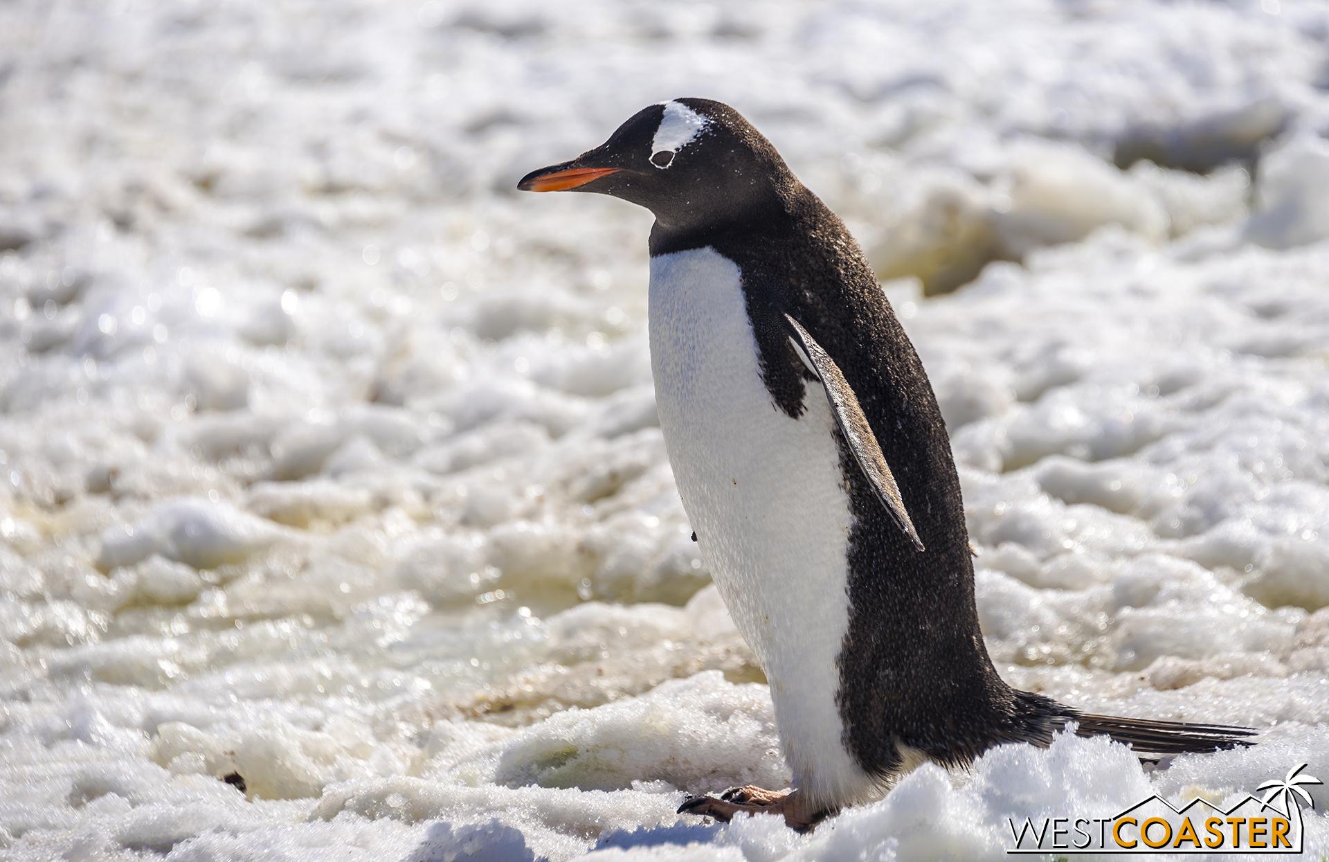 Antarctica-18_0726-0032.jpg