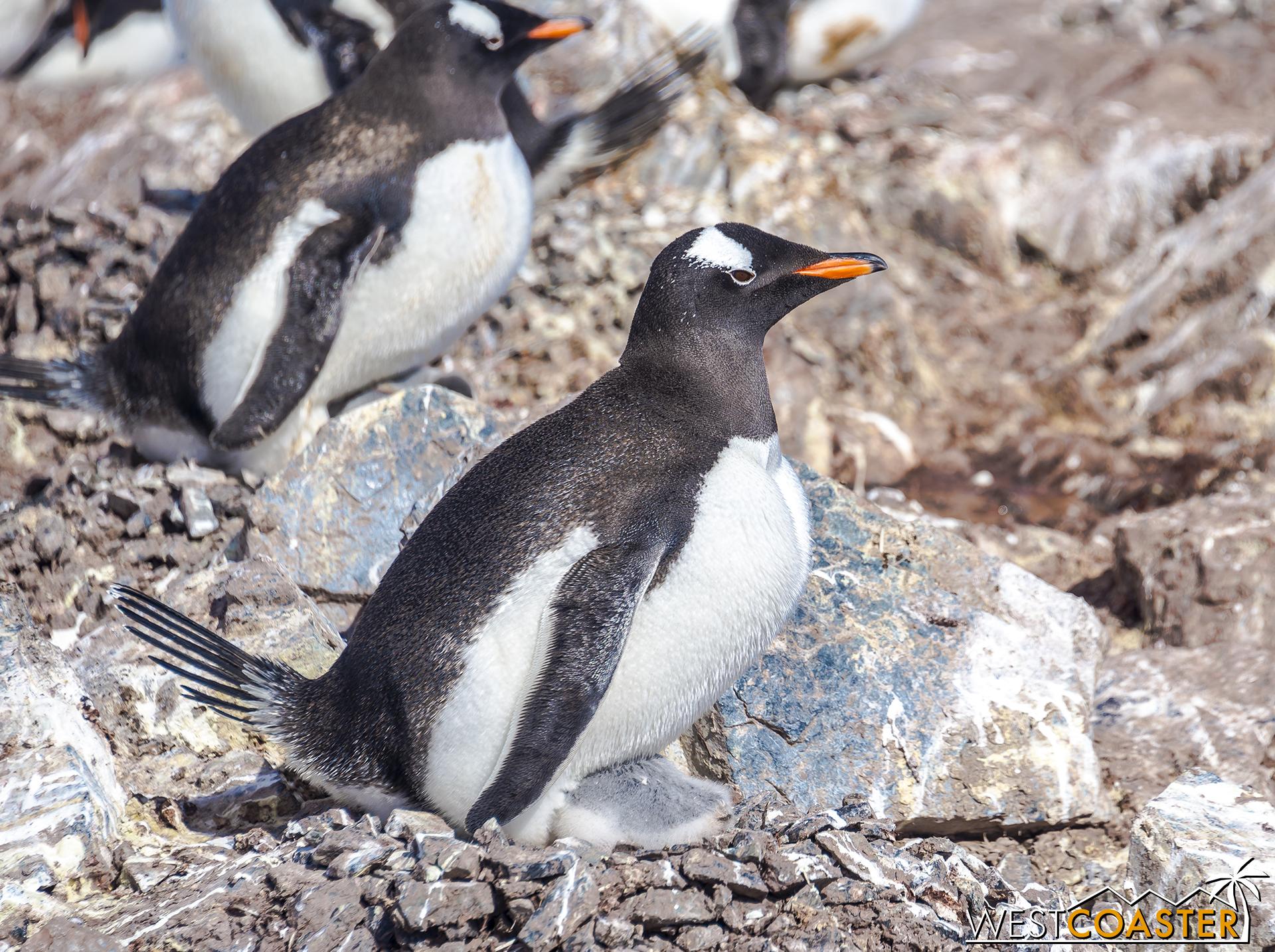 Antarctica-18_0726-0035.jpg