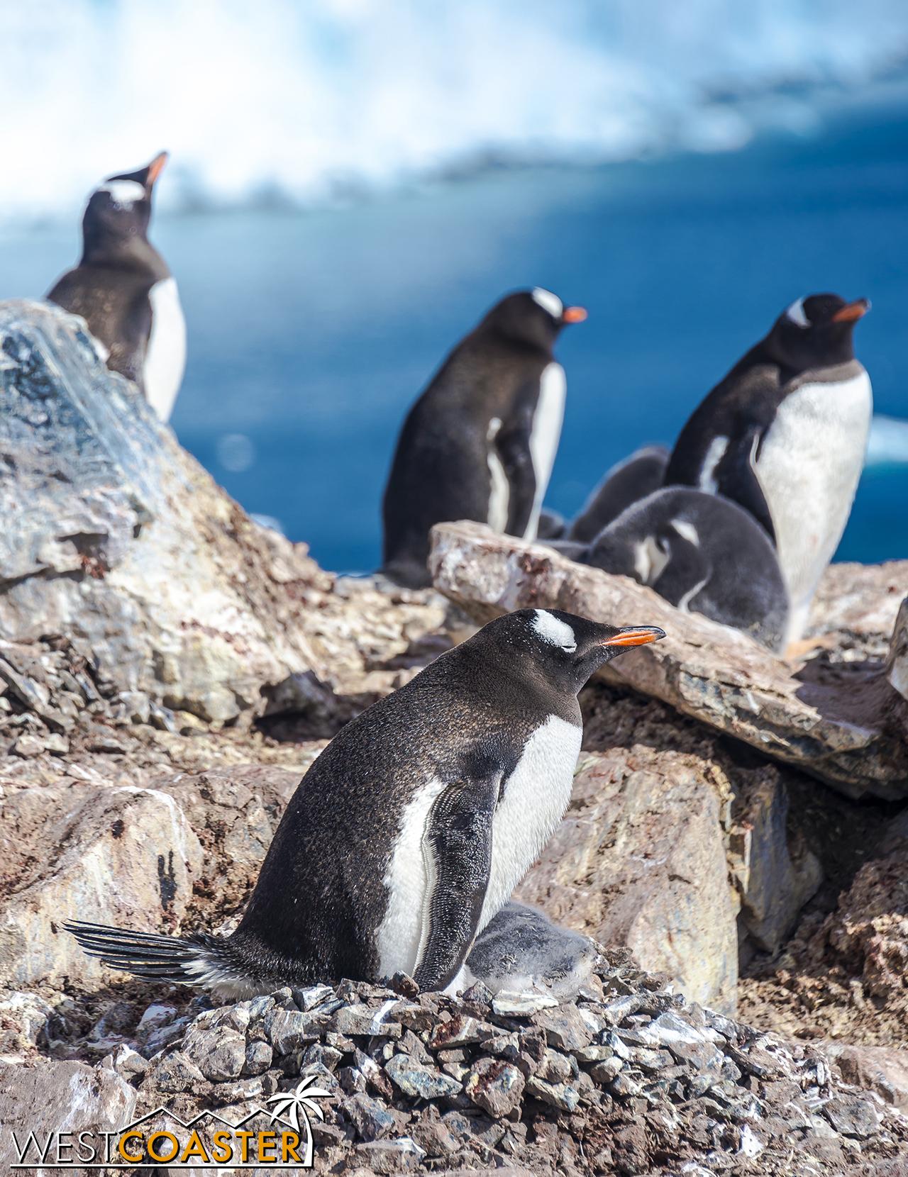 Antarctica-18_0726-0036.jpg