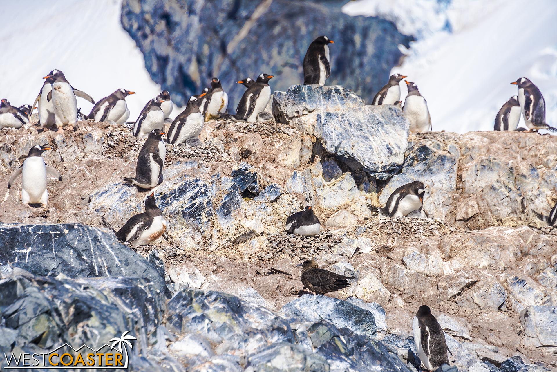 Antarctica-18_0726-0041.jpg