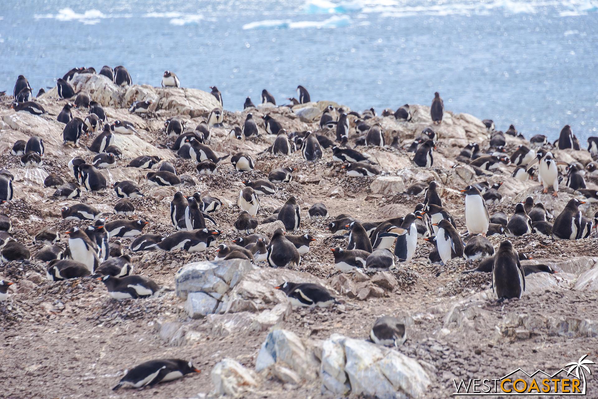Antarctica-18_0726-0051.jpg