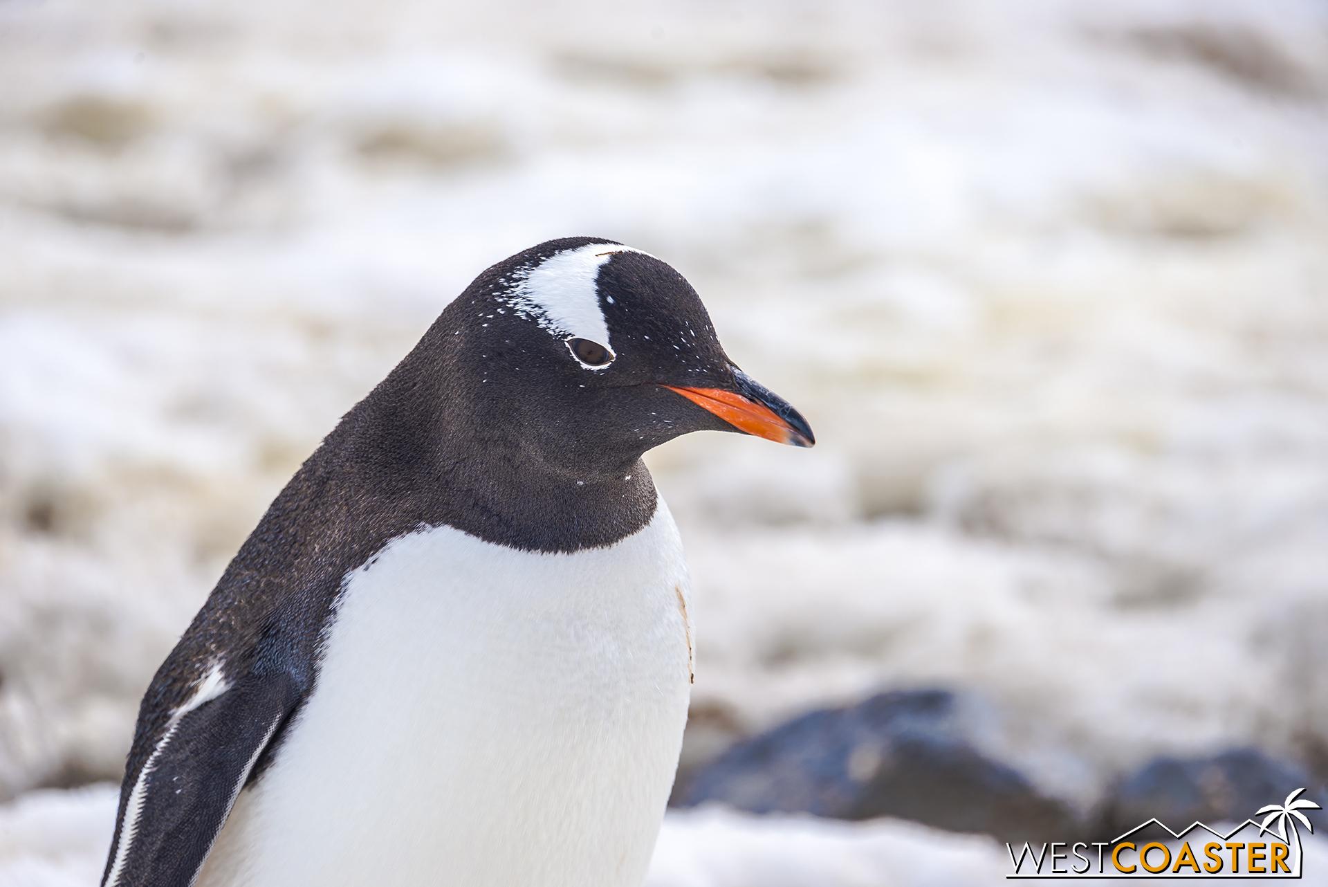 Antarctica-18_0726-0056.jpg