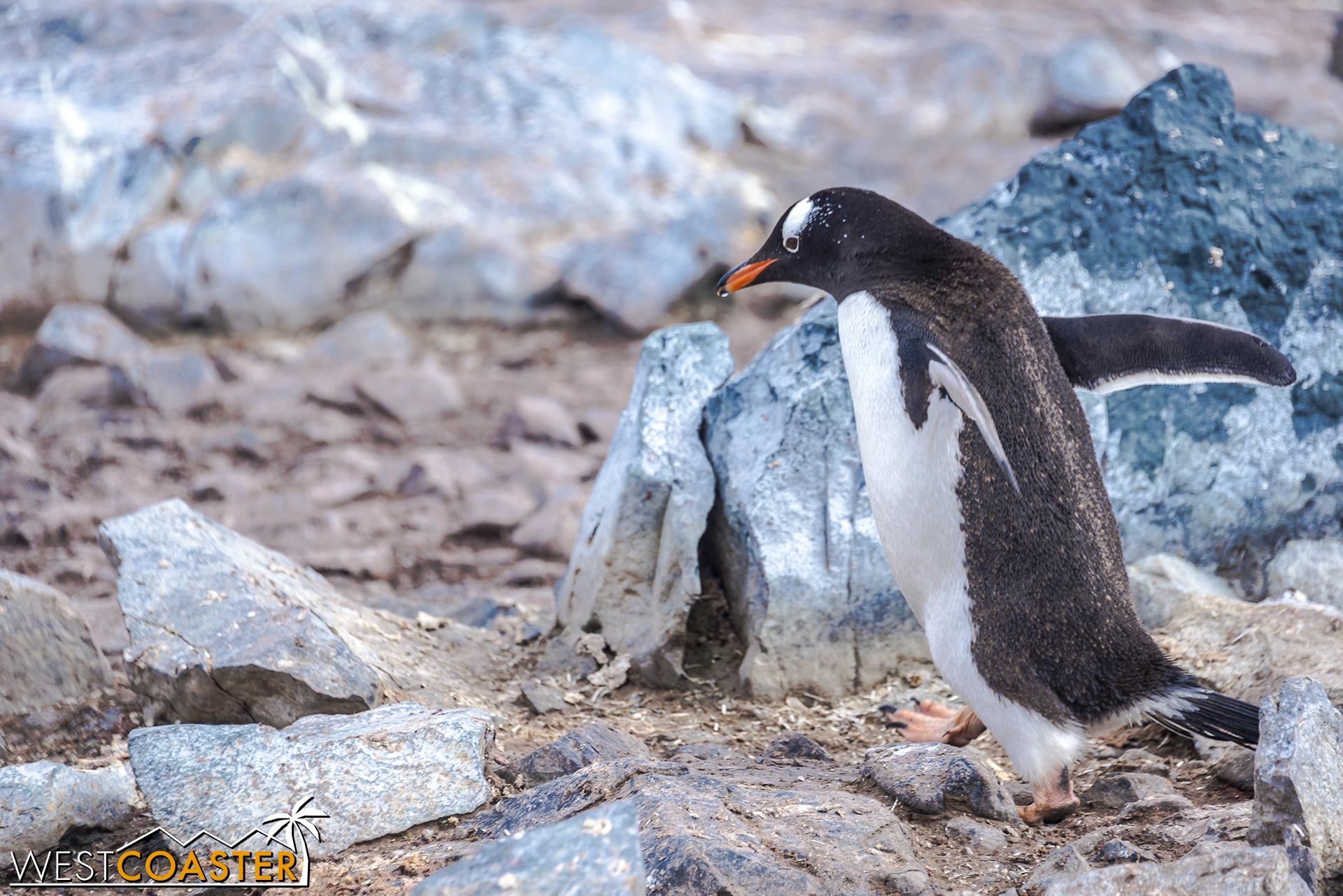 Antarctica-18_0726-0054.jpg