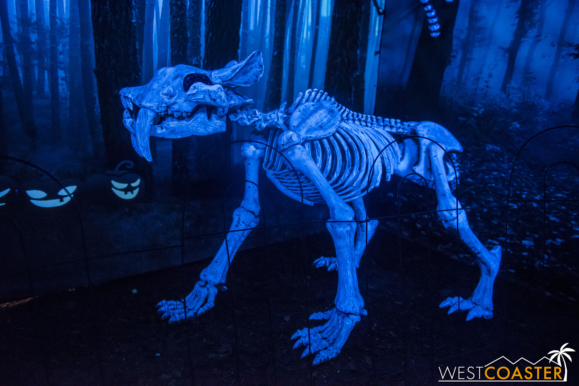 A sabertooth skeletal cat is one of many creatures in Deadwood Forest.