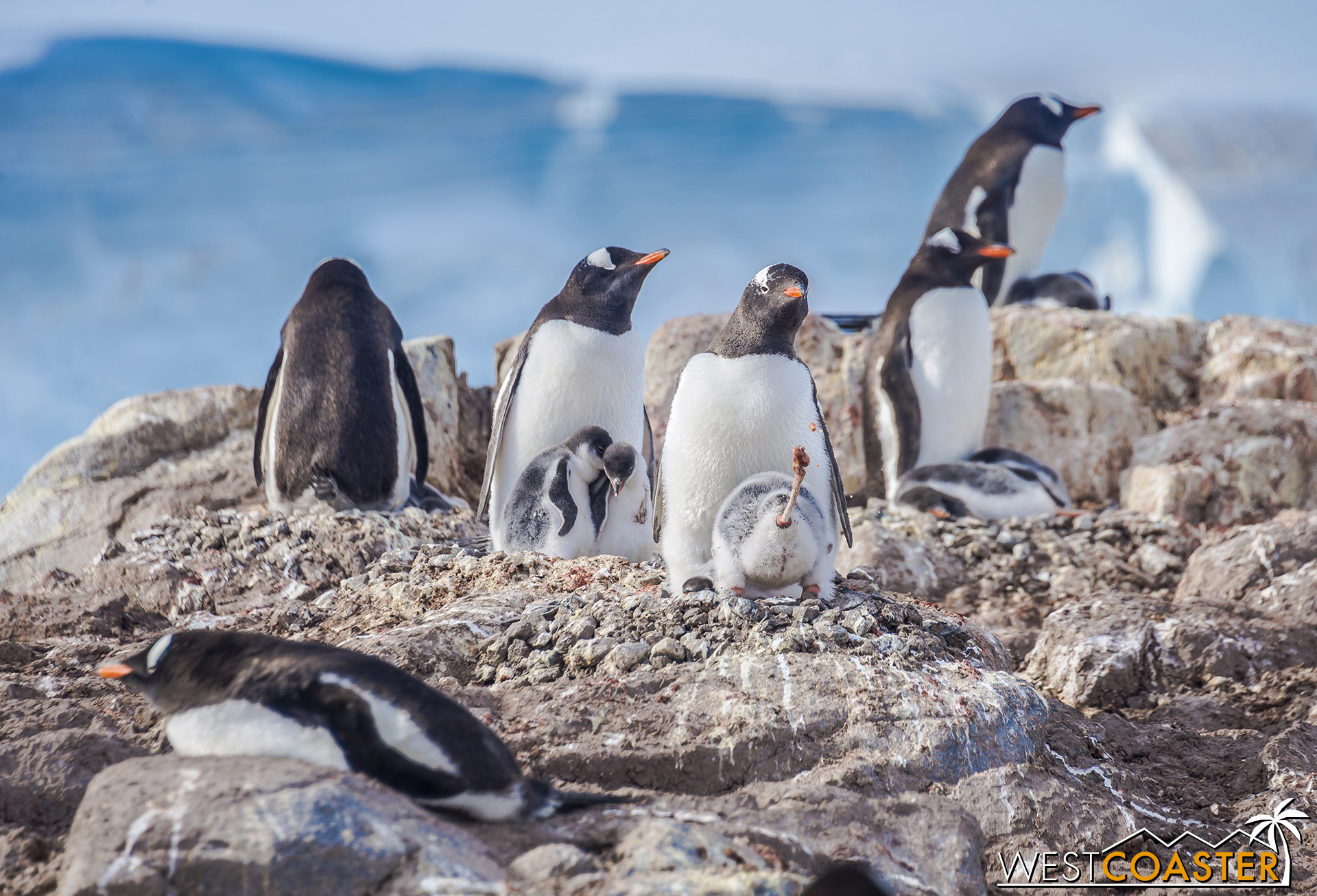 What a lovely photo of a group of penguins, but wait a minute…