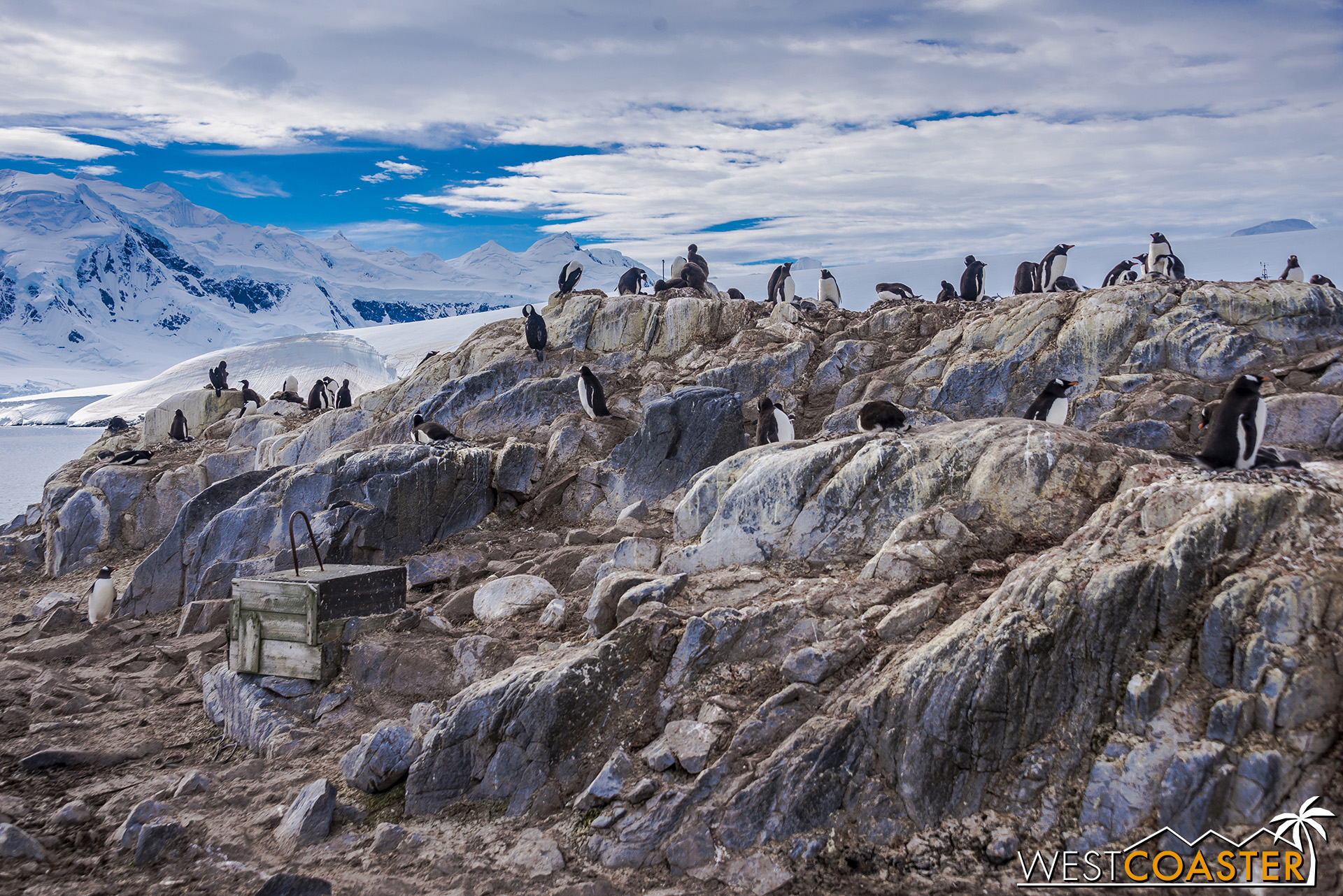 Penguins, penguins, scattered about everywhere!