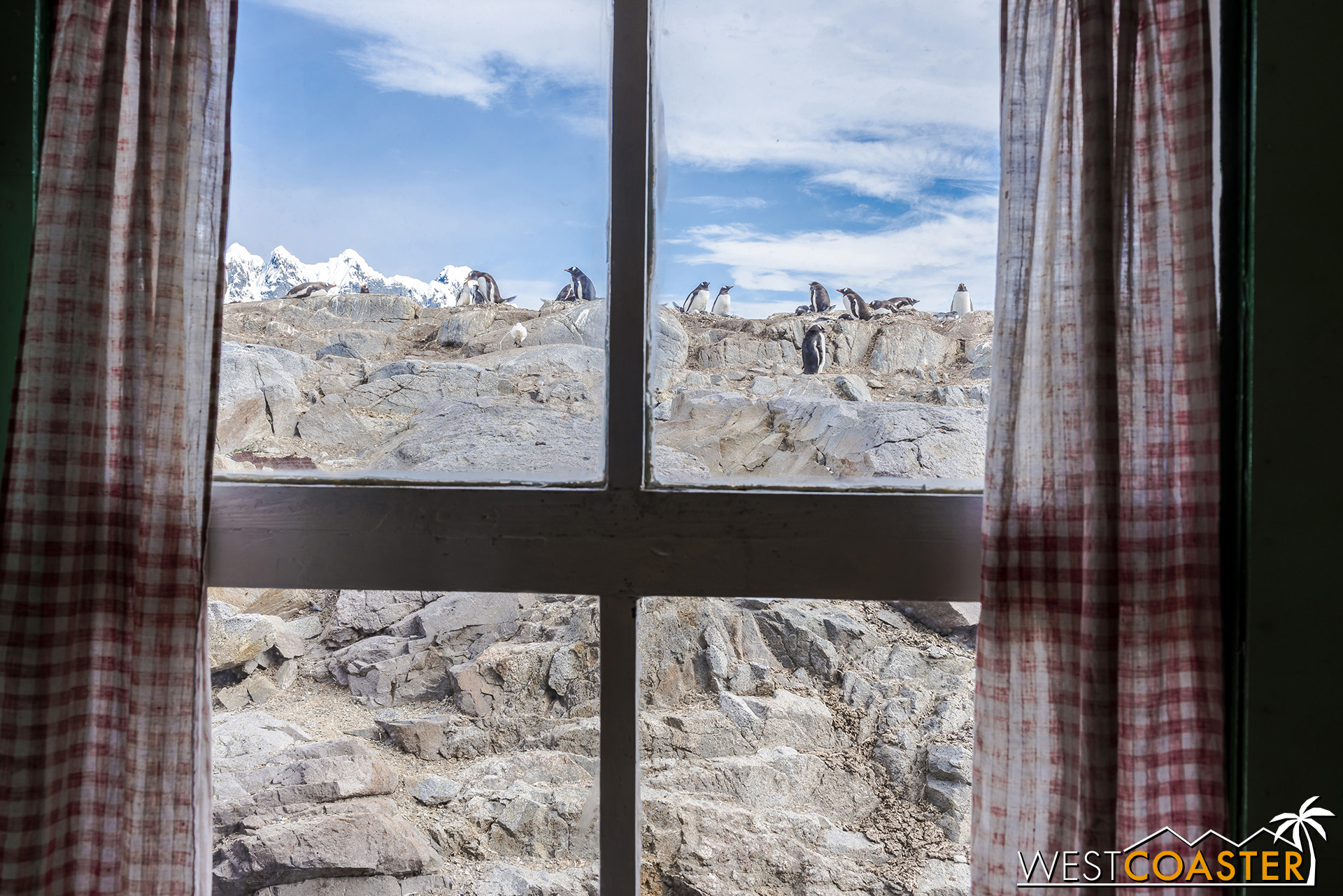 Imagine having a penguin view outside the window everyday!