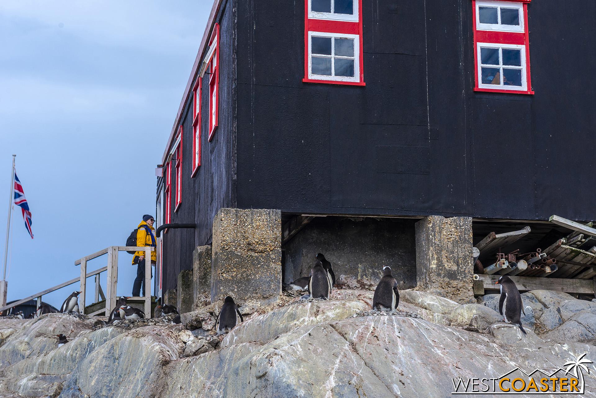 Antarctica-19_0103-0004.jpg