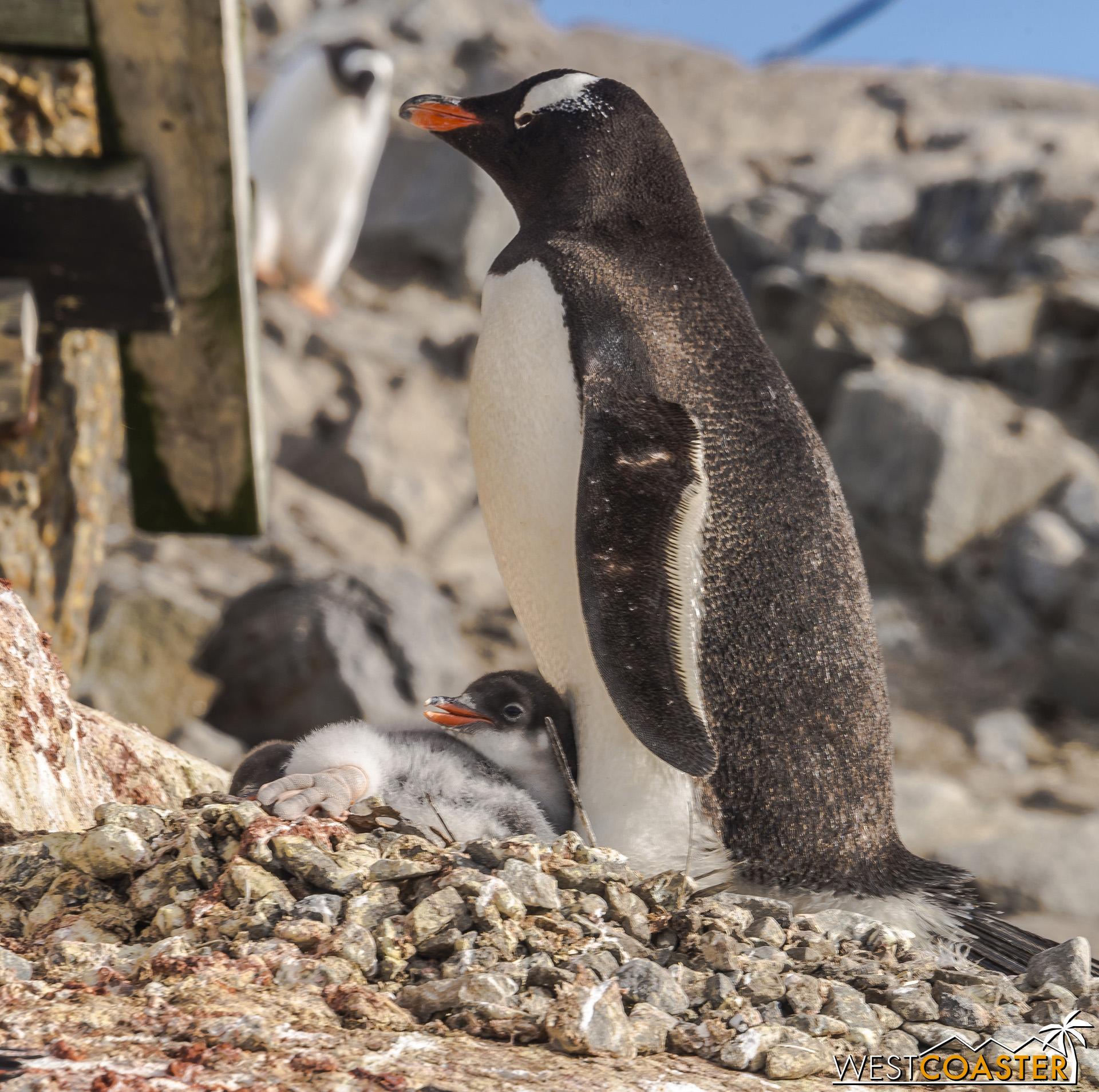 Antarctica-19_0103-0021.jpg