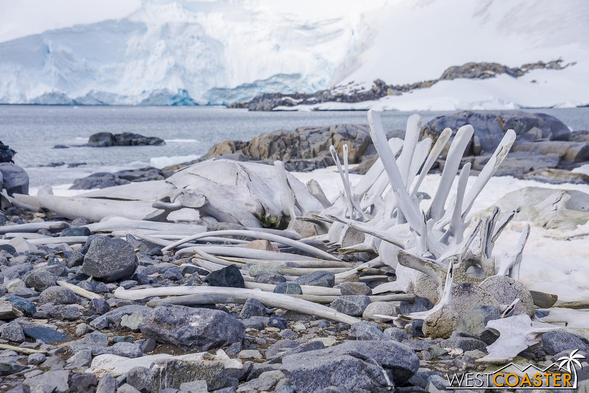 Antarctica-19_0103-0026.jpg