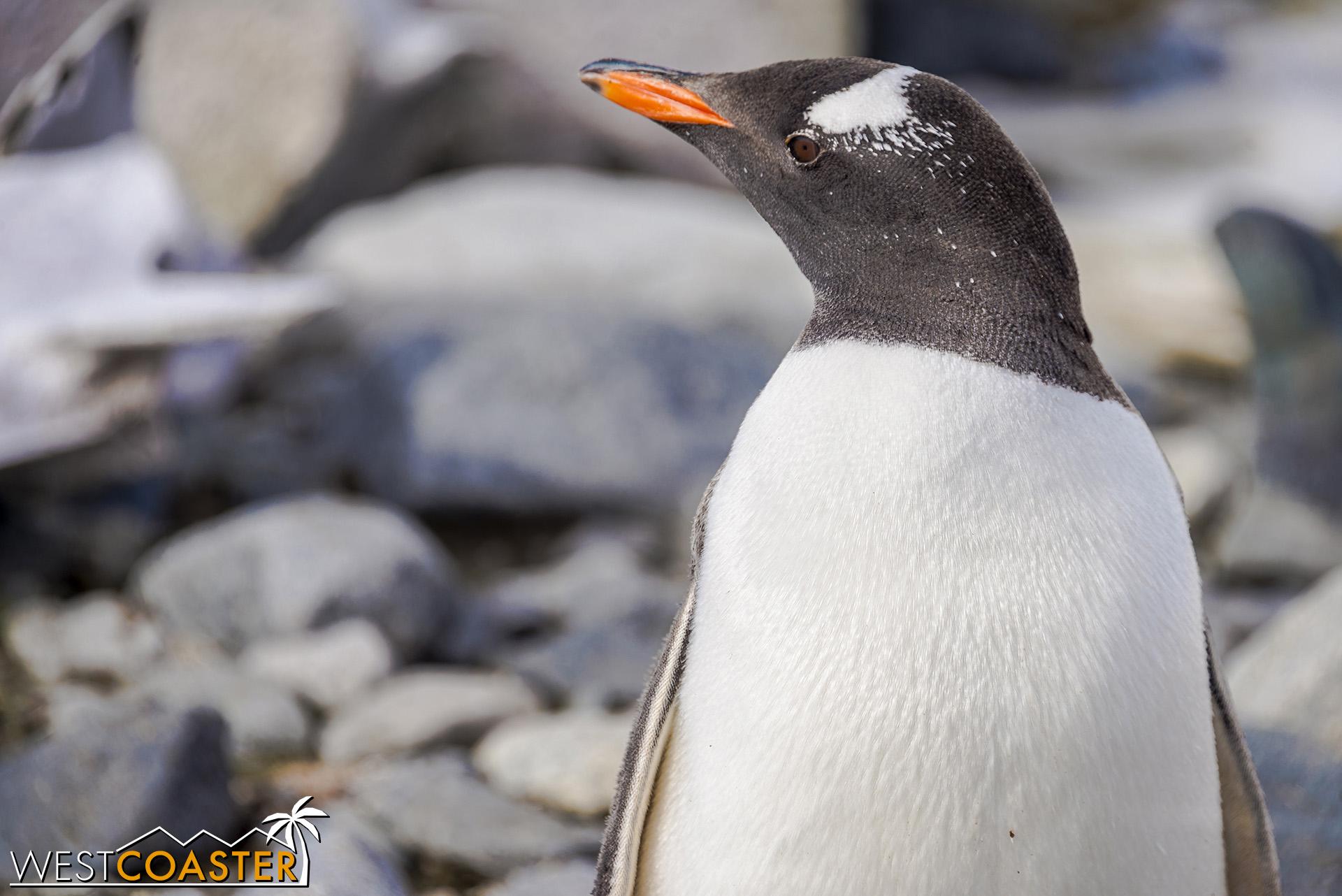 Antarctica-19_0103-0029.jpg
