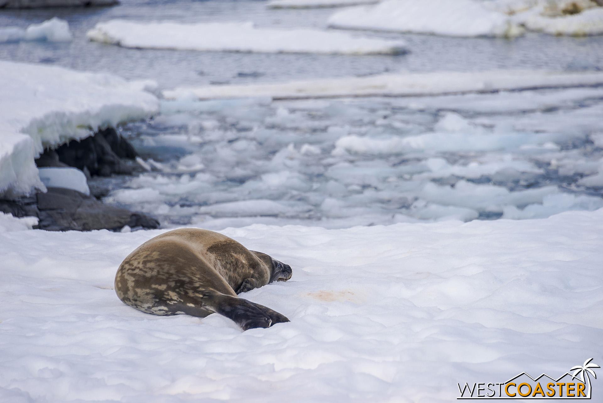 Antarctica-19_0103-0030.jpg