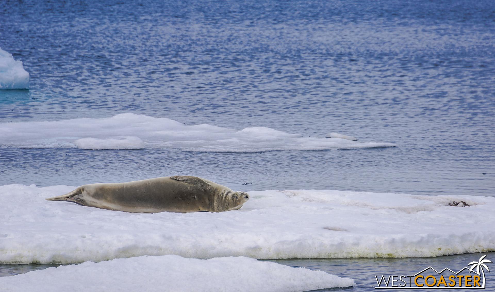 Antarctica-19_0103-0031.jpg