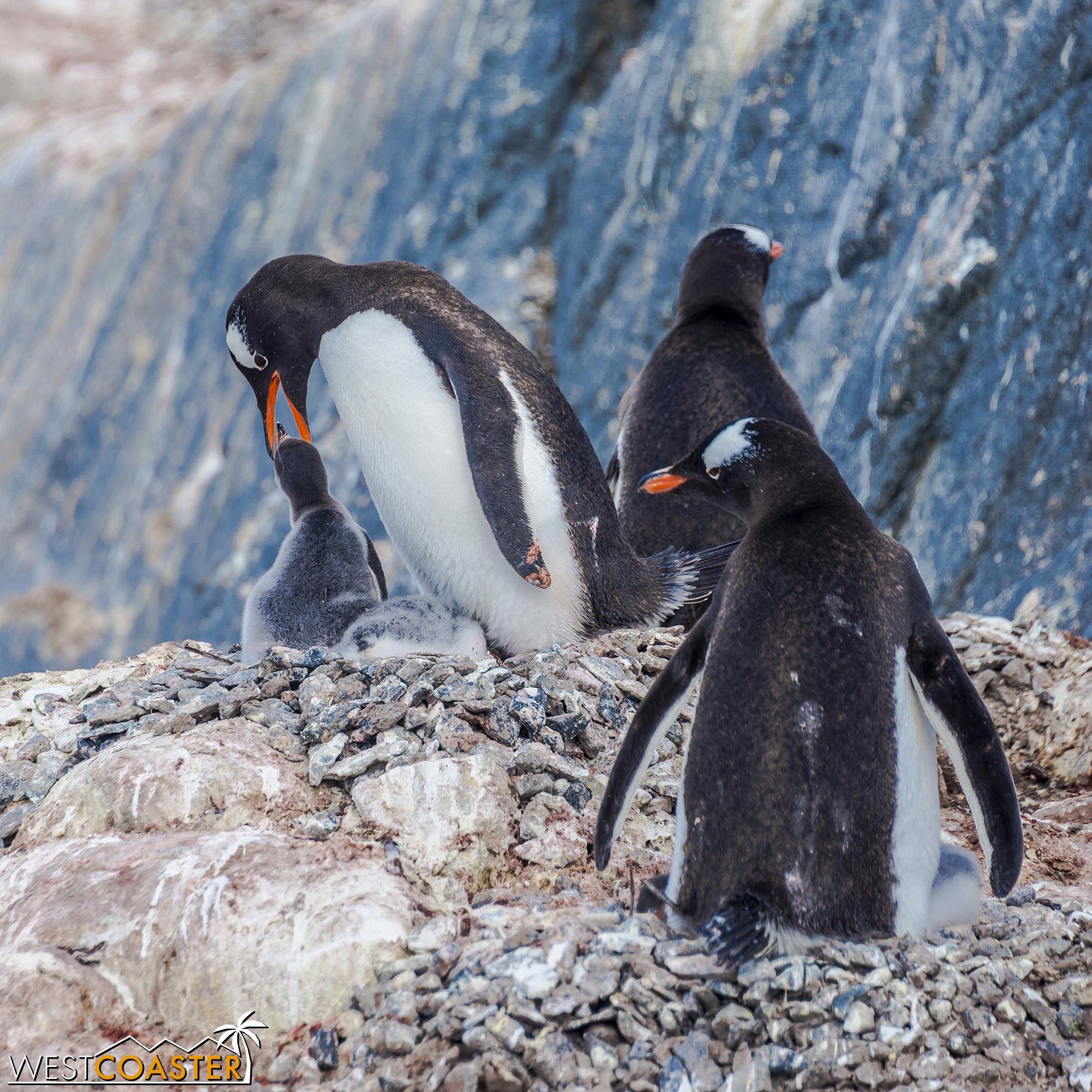 Antarctica-19_0103-0034.jpg