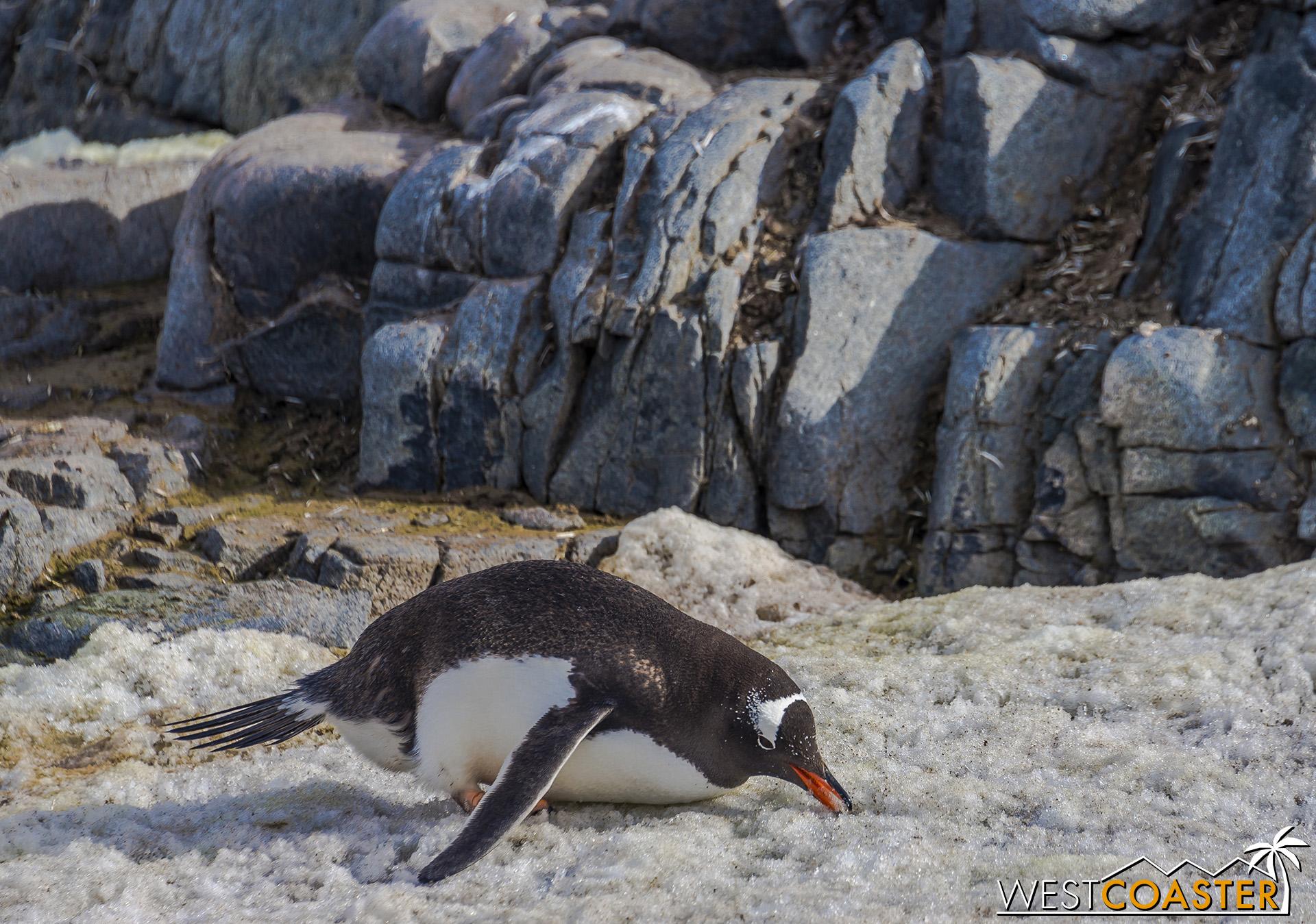 Antarctica-19_0103-0045.jpg