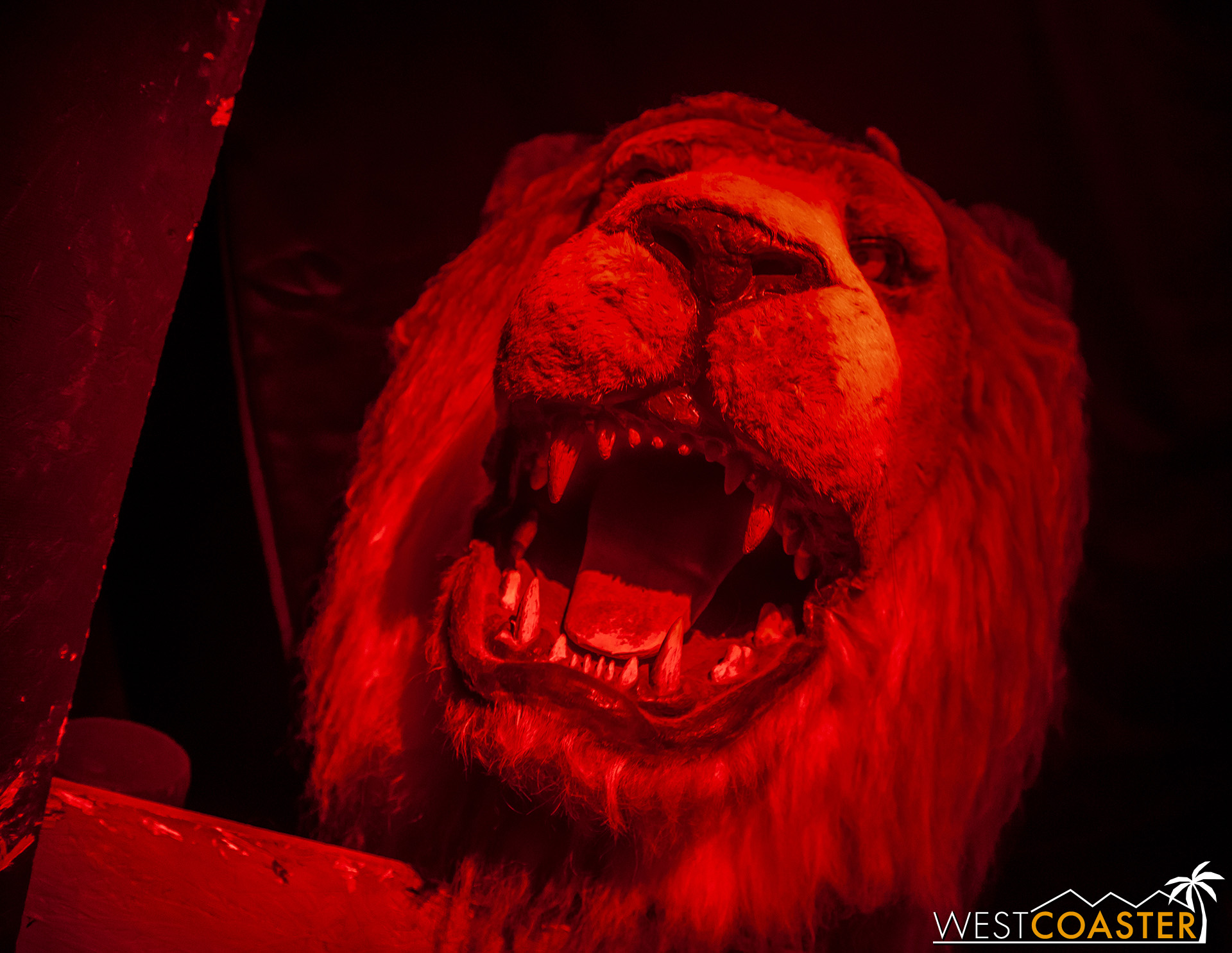 Darkness, then strobes, then lions, oh my!