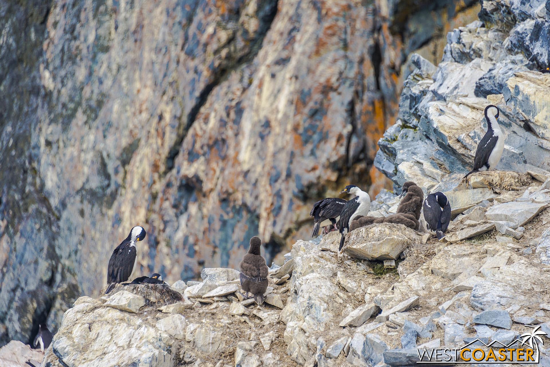 Cormorants nesting in the rocks above.