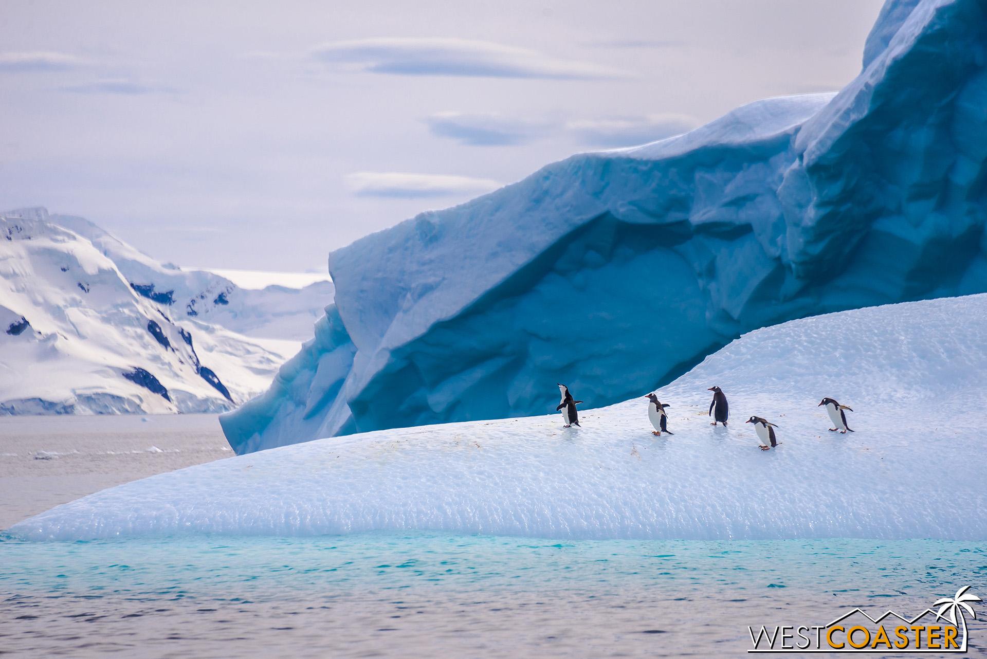 Antarctica-19_0109-0004.jpg