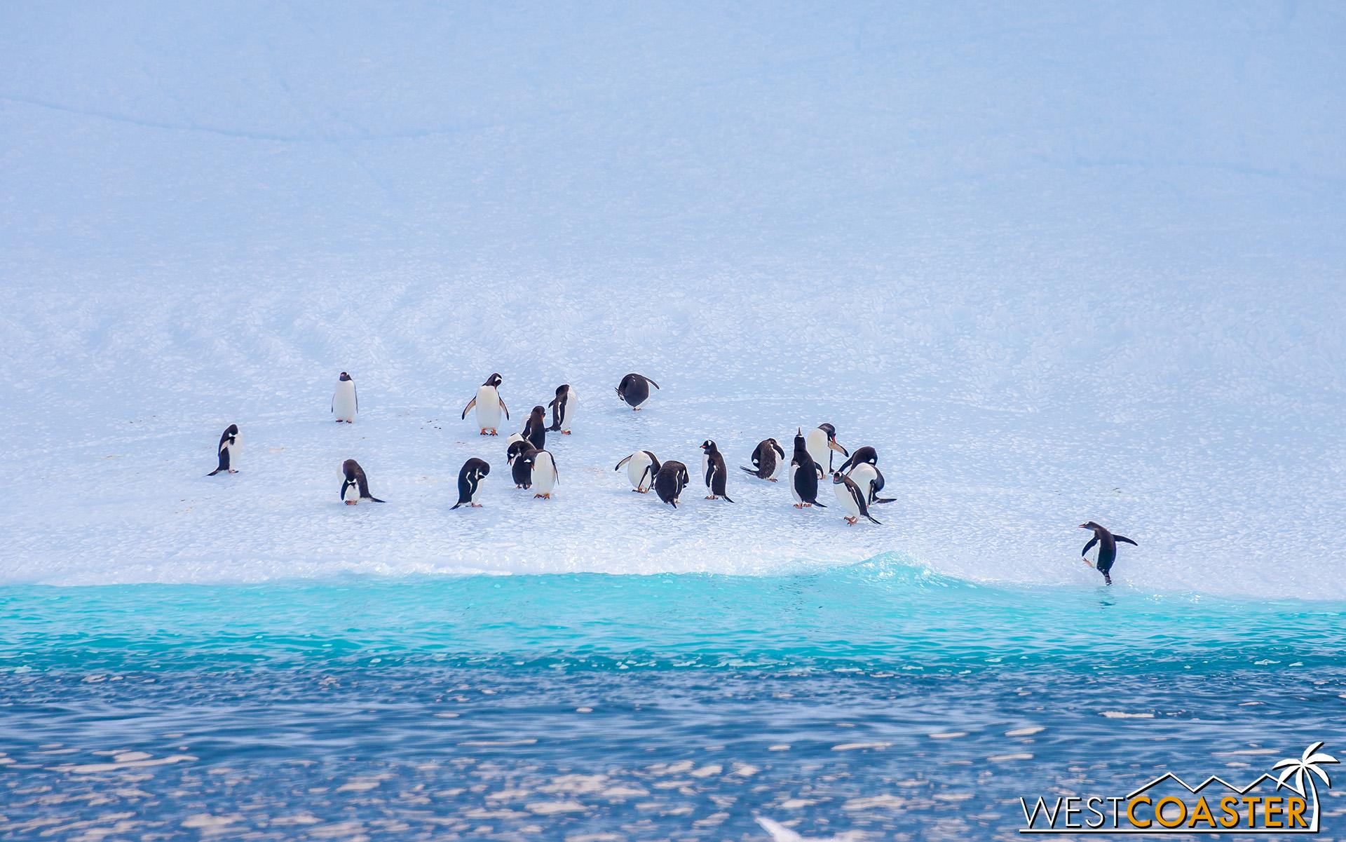 Antarctica-19_0109-0005.jpg