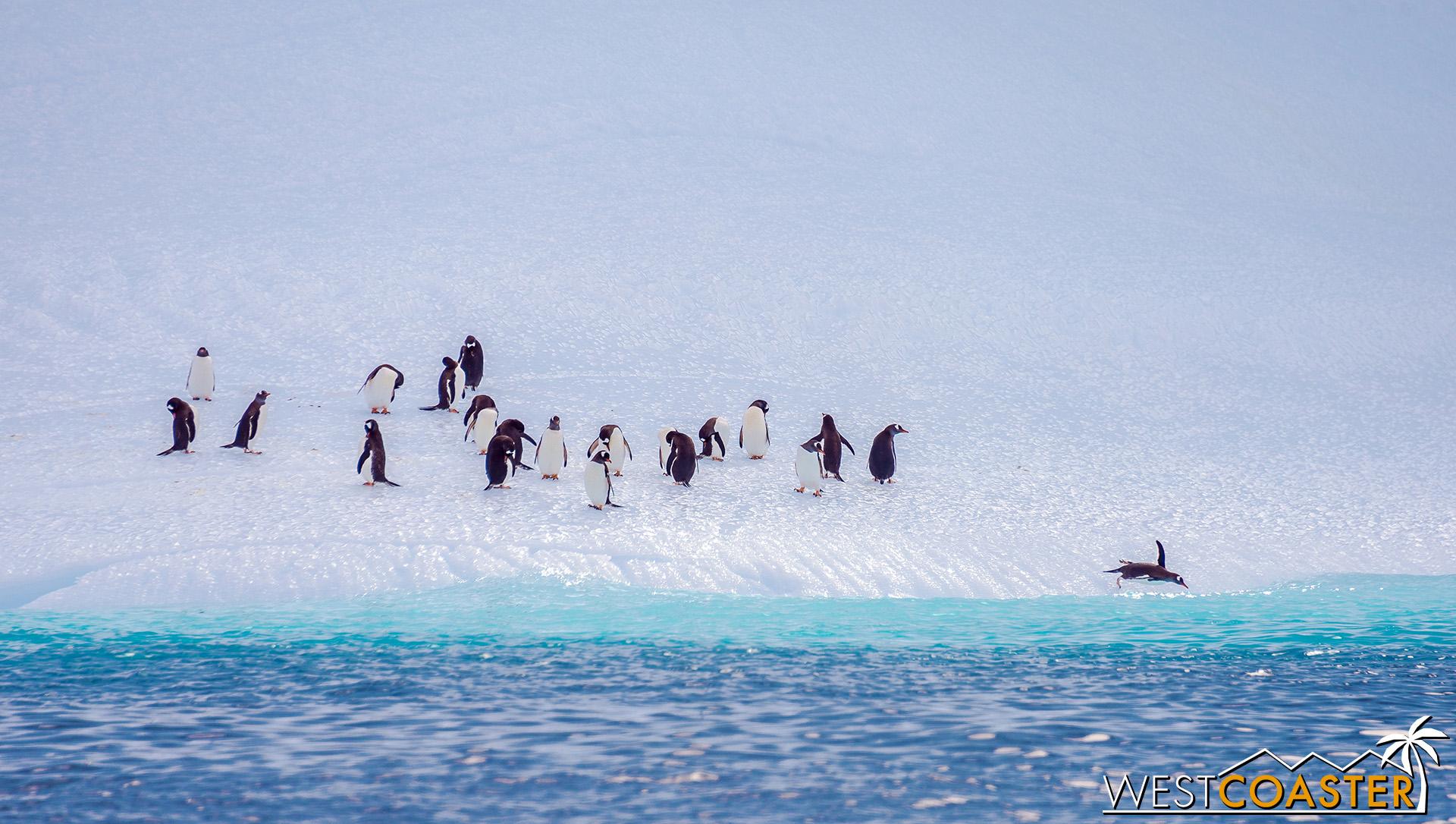 Antarctica-19_0109-0006.jpg