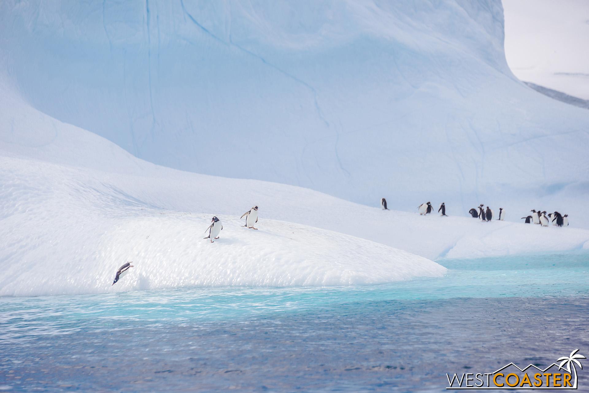 Antarctica-19_0109-0008.jpg