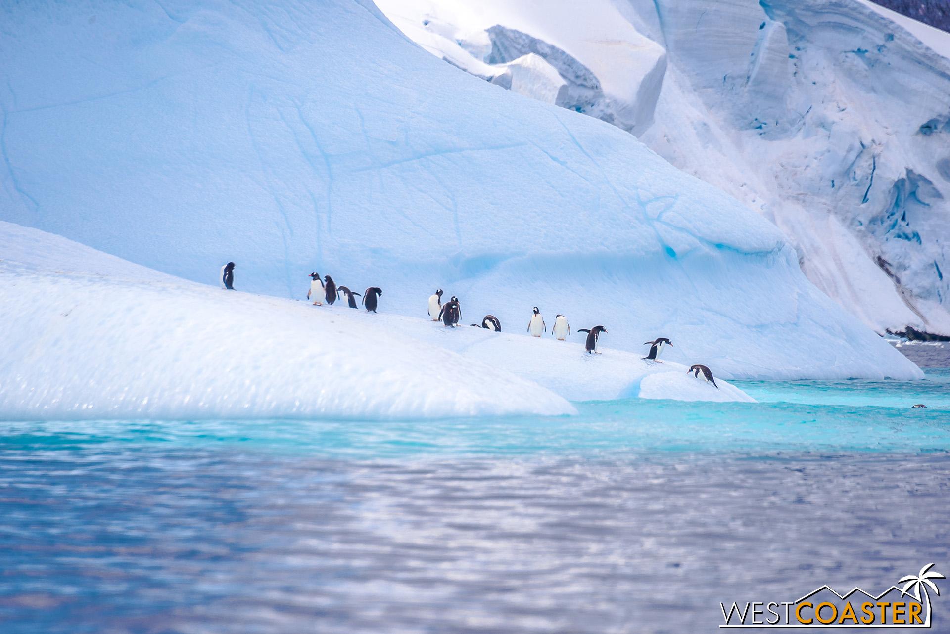 Antarctica-19_0109-0009.jpg