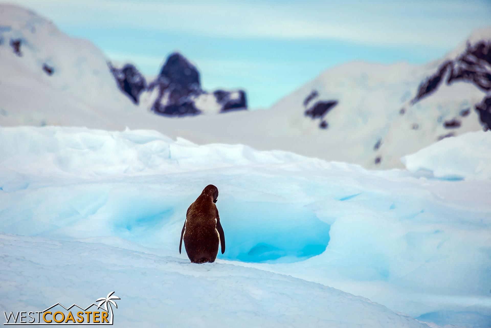 Antarctica-19_0109-0017.jpg