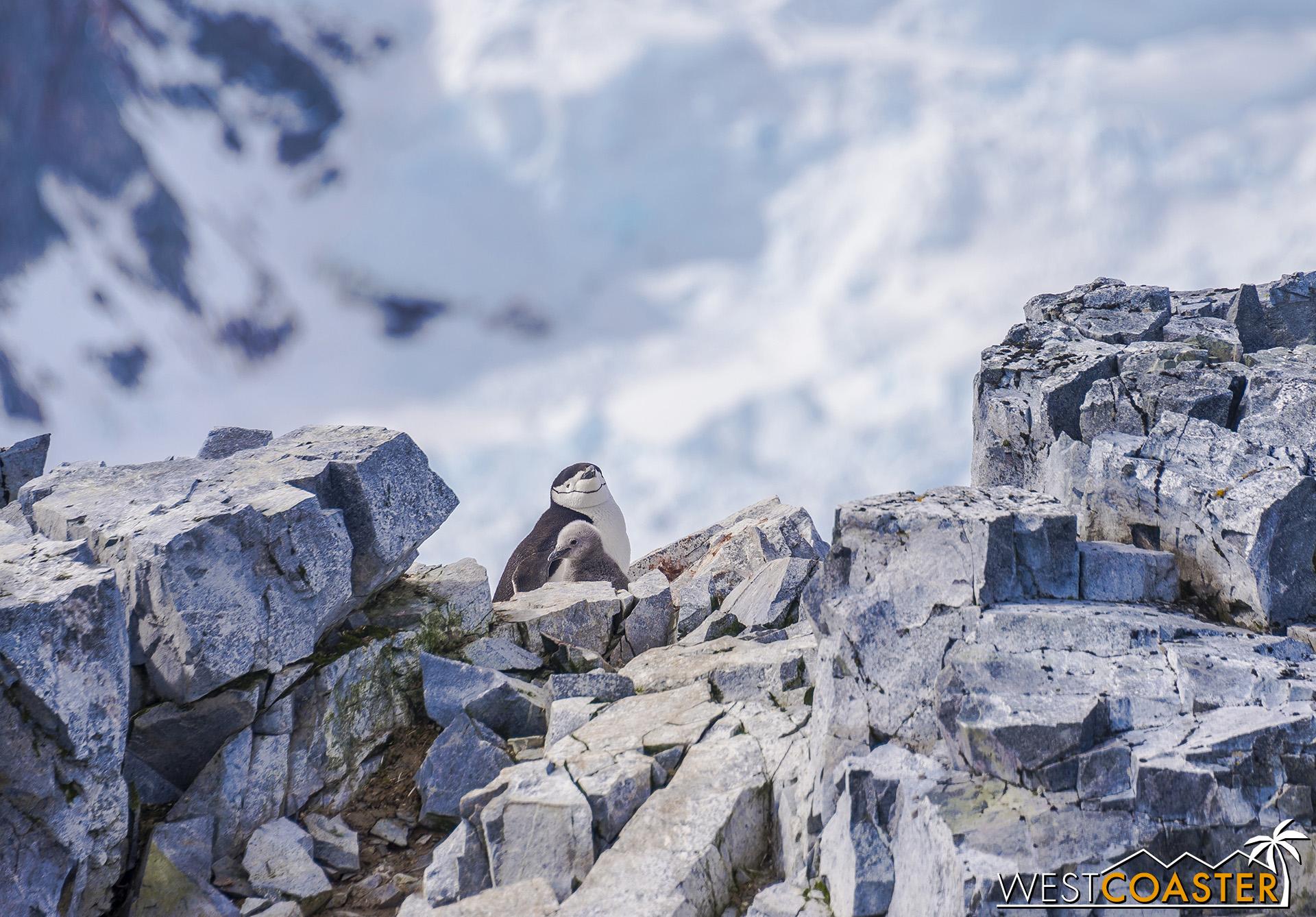 Antarctica-19_0109-0037.jpg