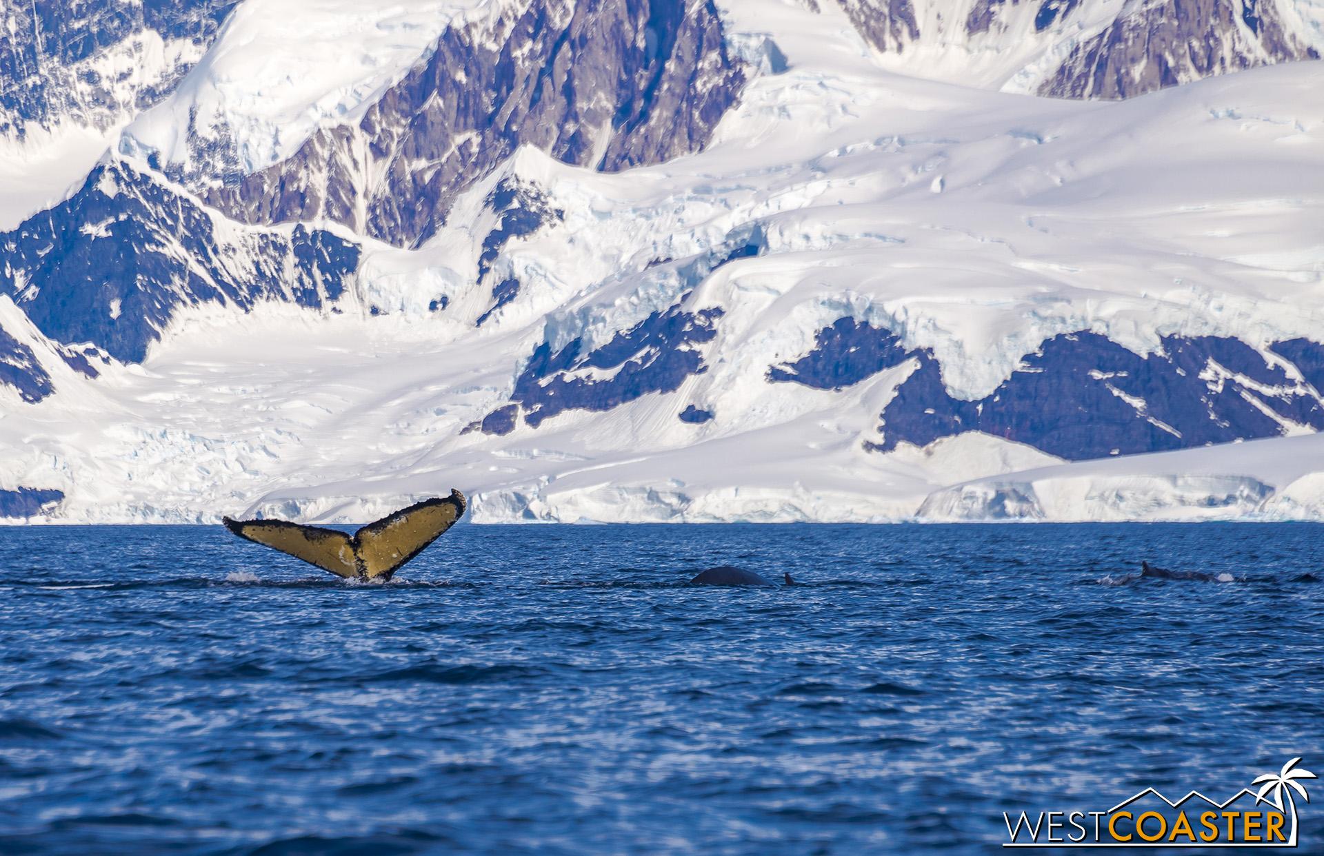 Antarctica-19_0114-B-WilheminaBay-0016.jpg